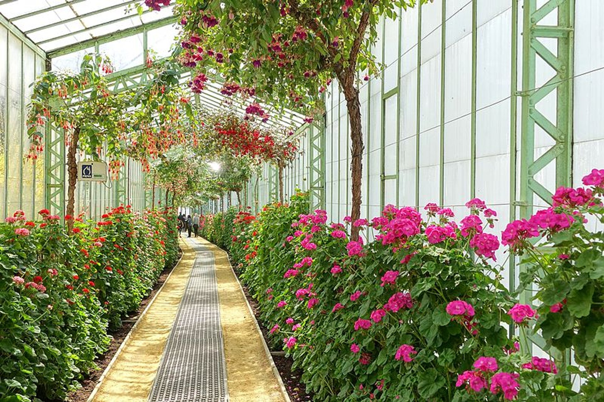Best time for Royal Greenhouses of Laeken in Brussels 2020