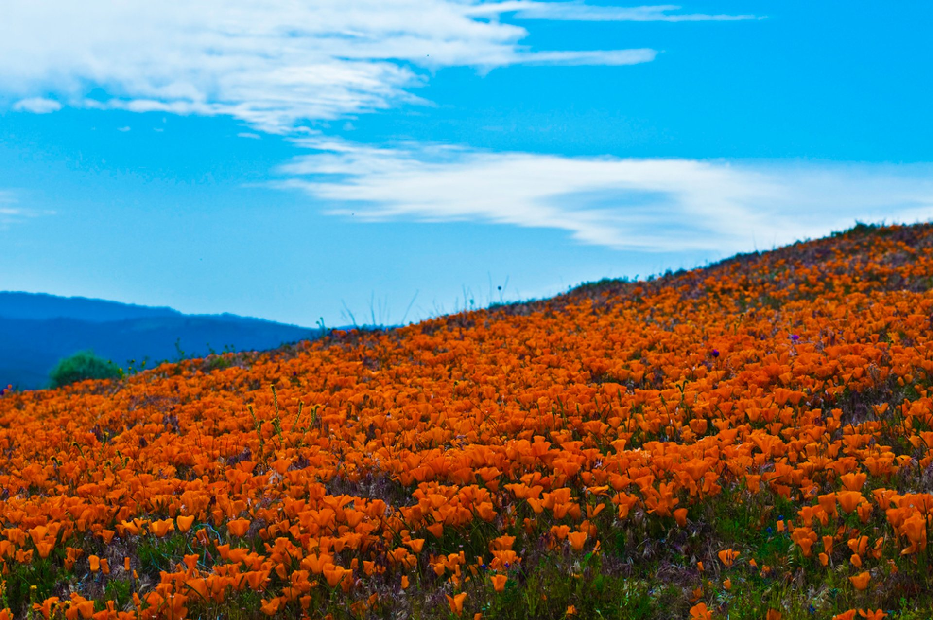 Best time to see Antelope Valley California Poppy Reserve in California 2020
