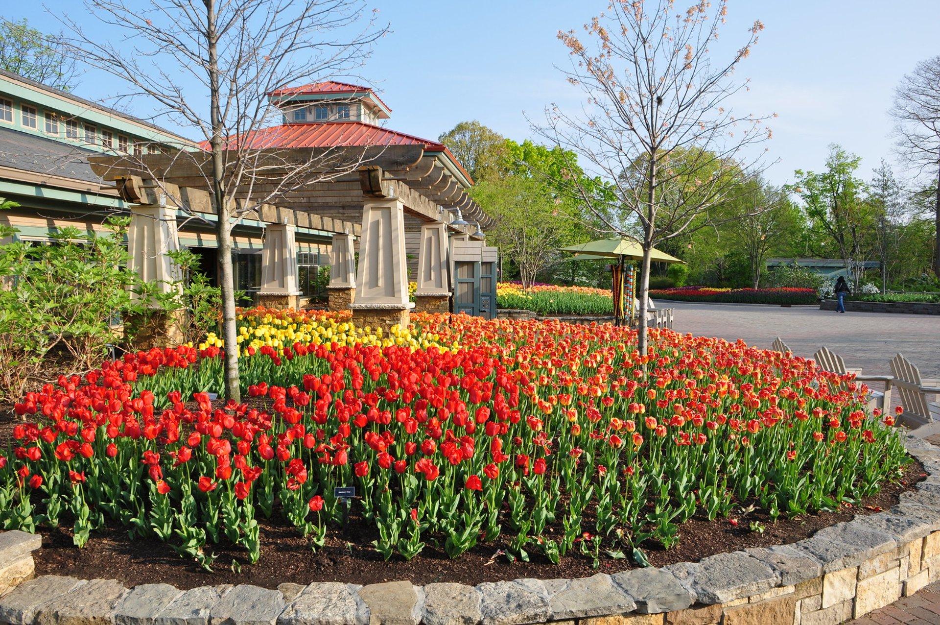 Tulips at the Cincinnati Zoo & Botanical Garden 2020