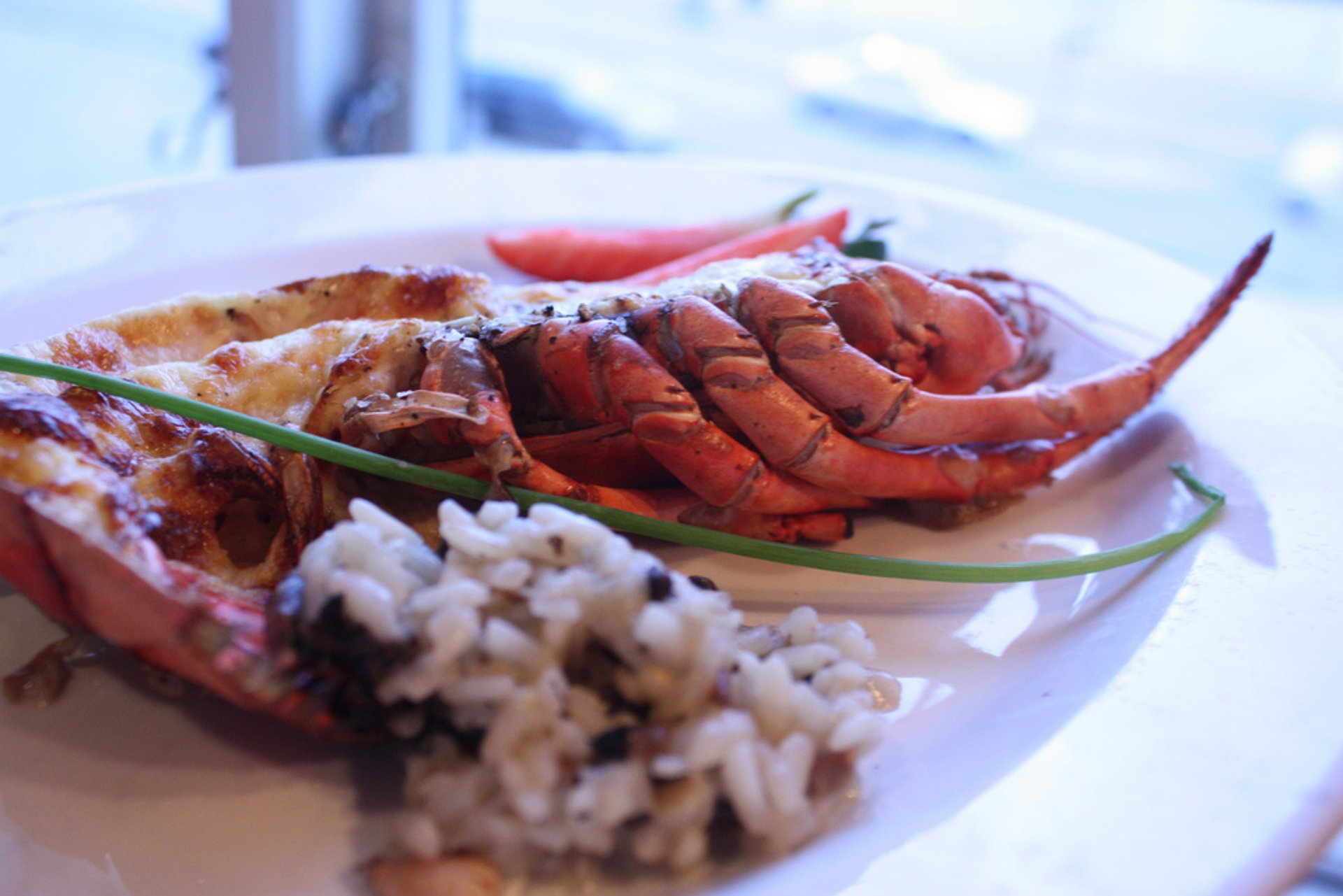 Norwegian Lobster in Norway - Best Season 2020