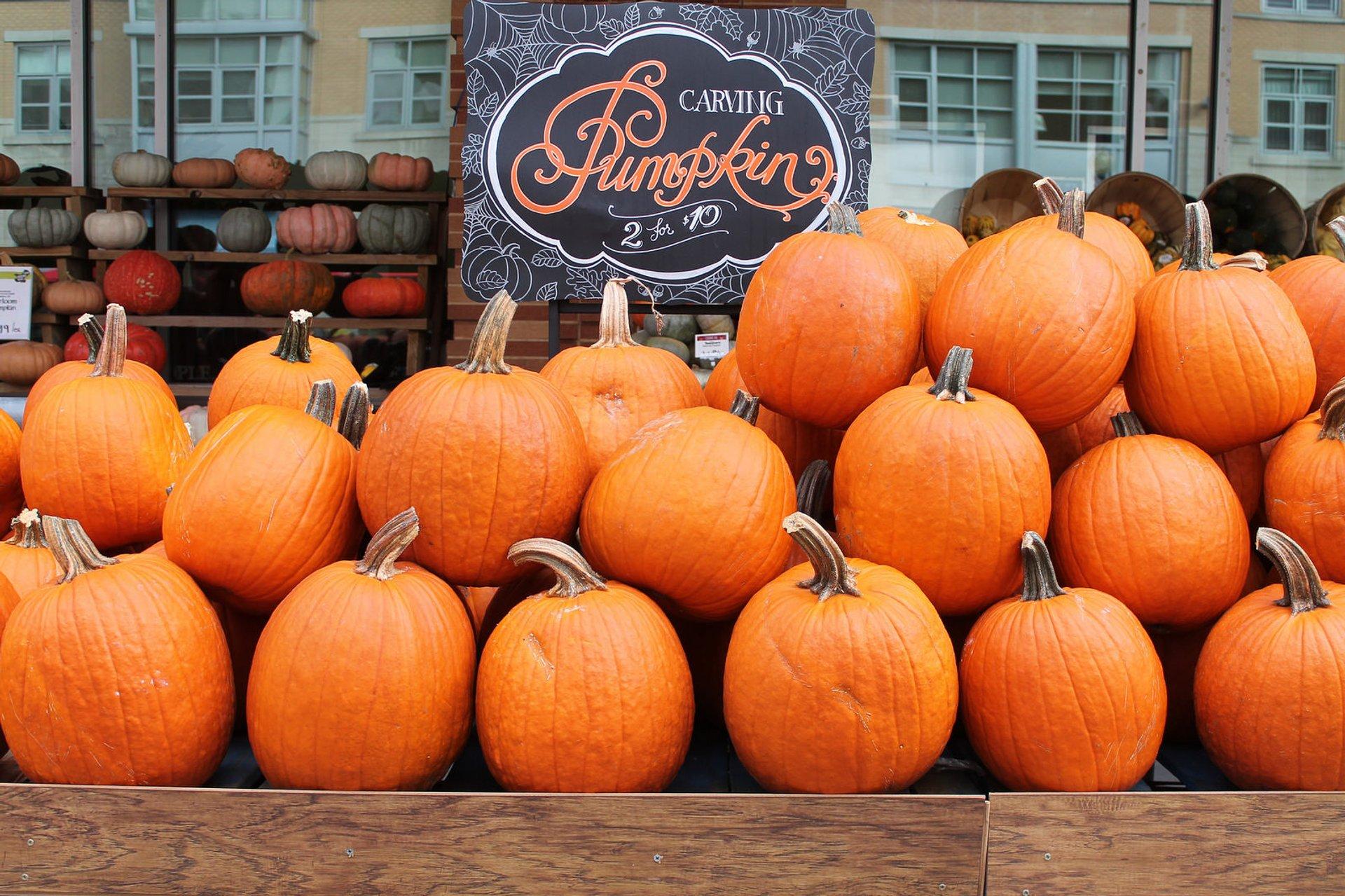 Autumn Pumpkin Patch in Washington, D.C. 2020 - Best Time