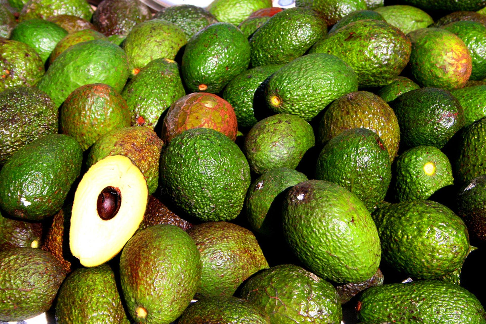 Avocado in Rio de Janeiro 2020 - Best Time