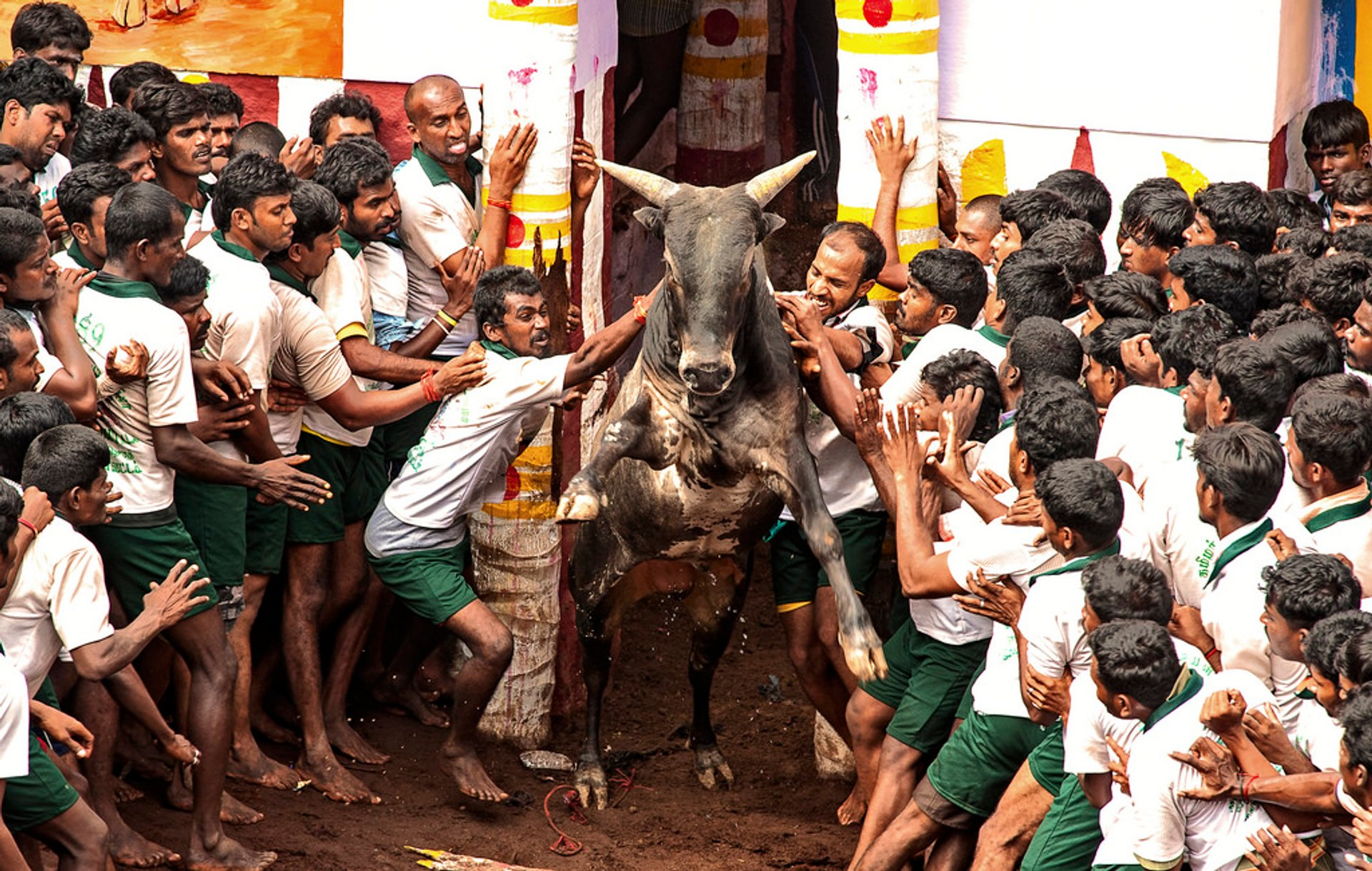 Jallikattu in India 2019 - Best Time