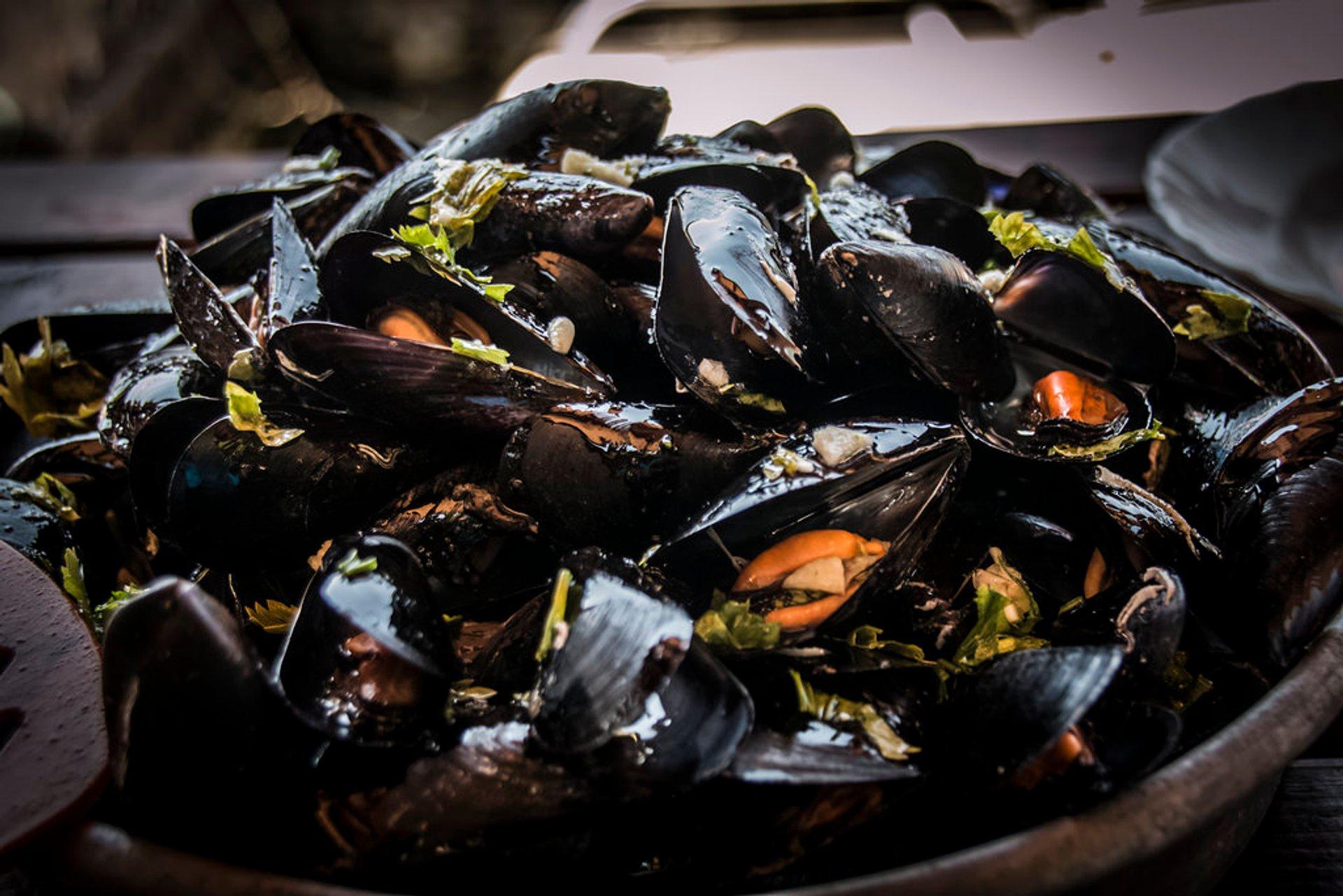 Mussels Season in Montenegro 2020 - Best Time