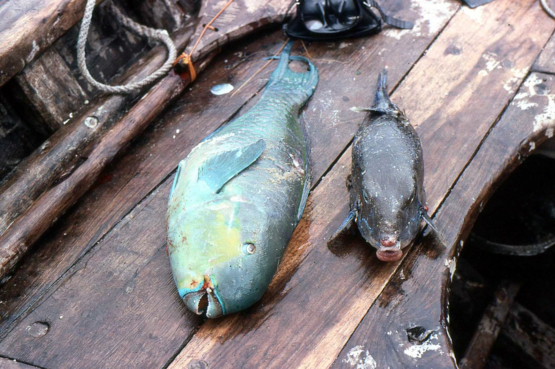 Fishing in Tanzania - Best Season