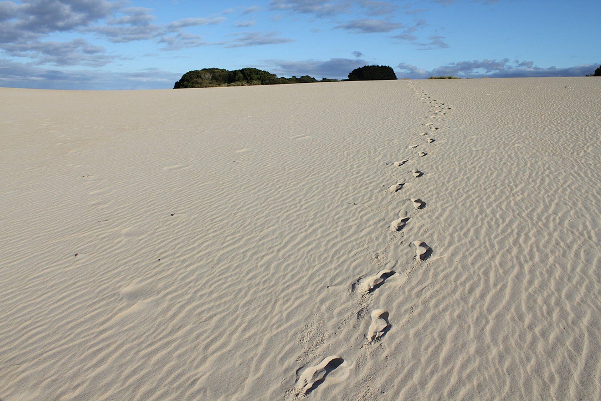Sandboarding Season in Tasmania 2019 - Best Time