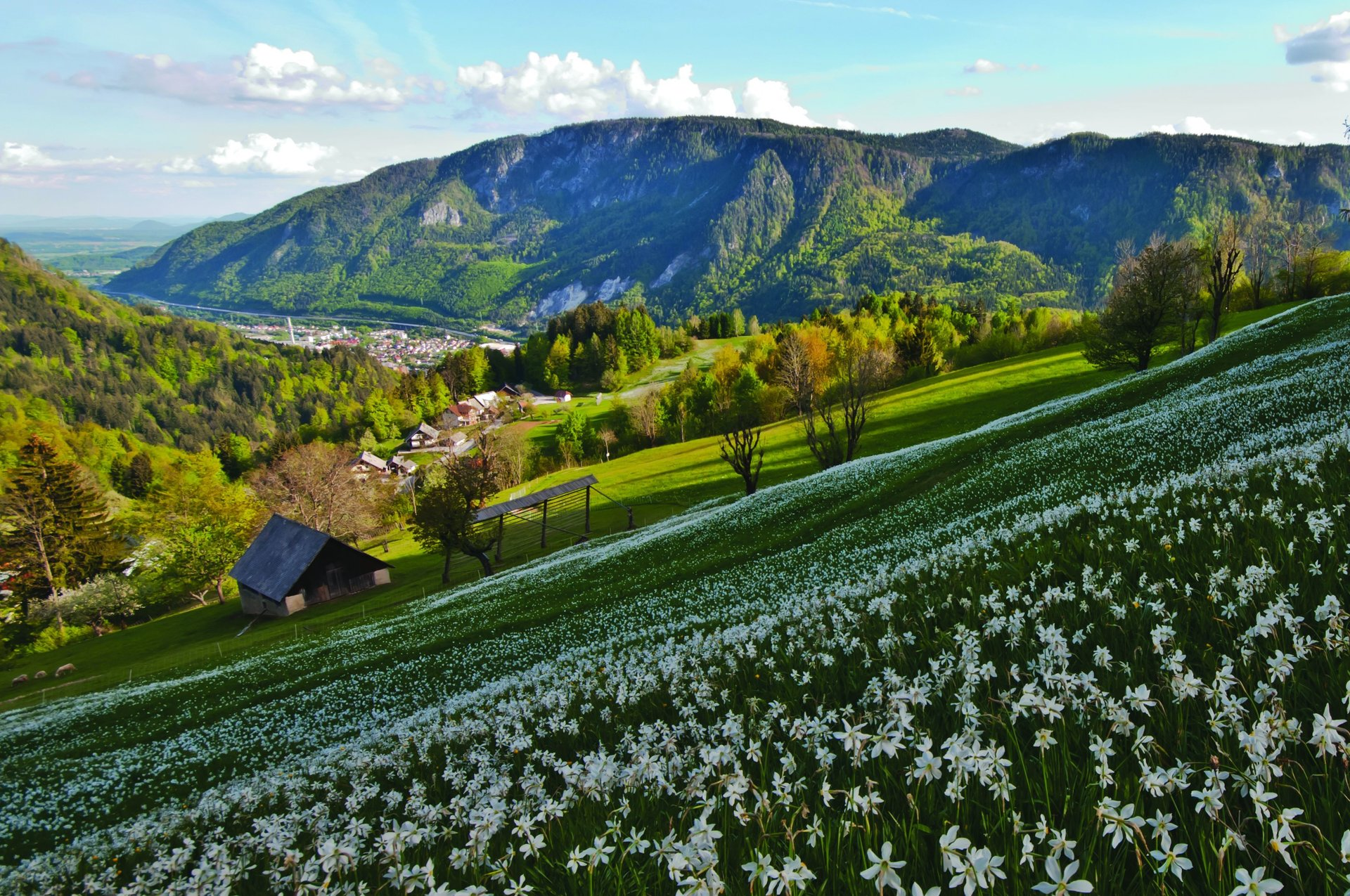 Jesenice, the town of steel and flowers 2020