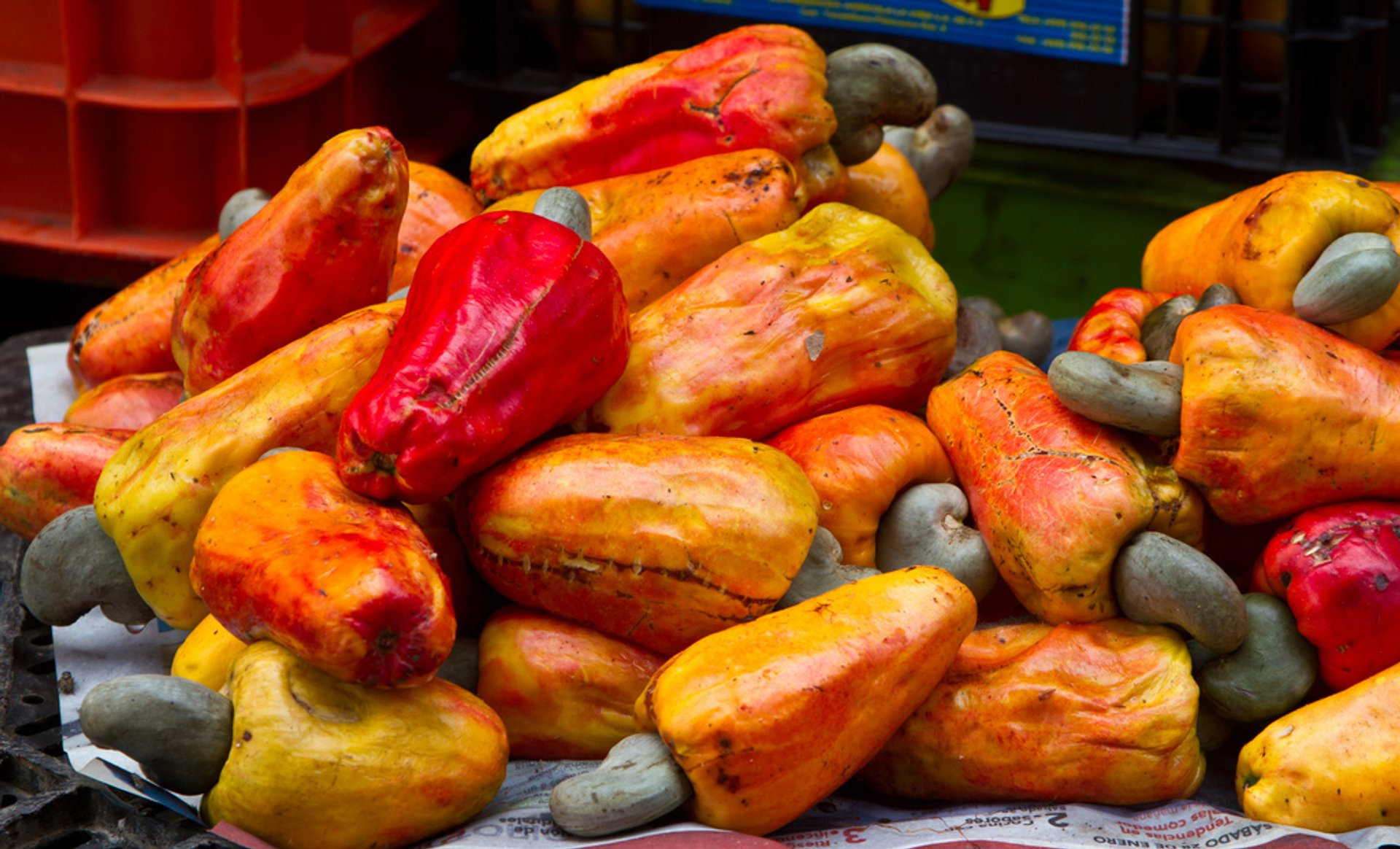 Best time for Cashew in Costa Rica 2020
