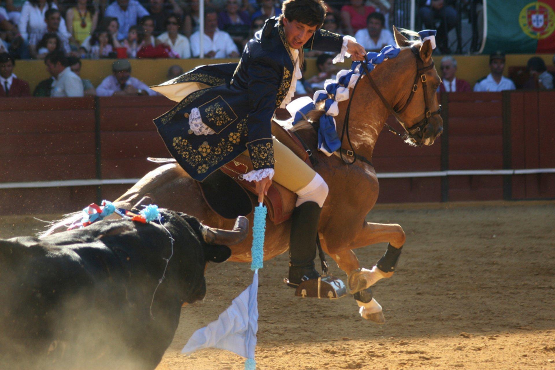 Lisbon Bullfighting in Portugal - Best Season 2019