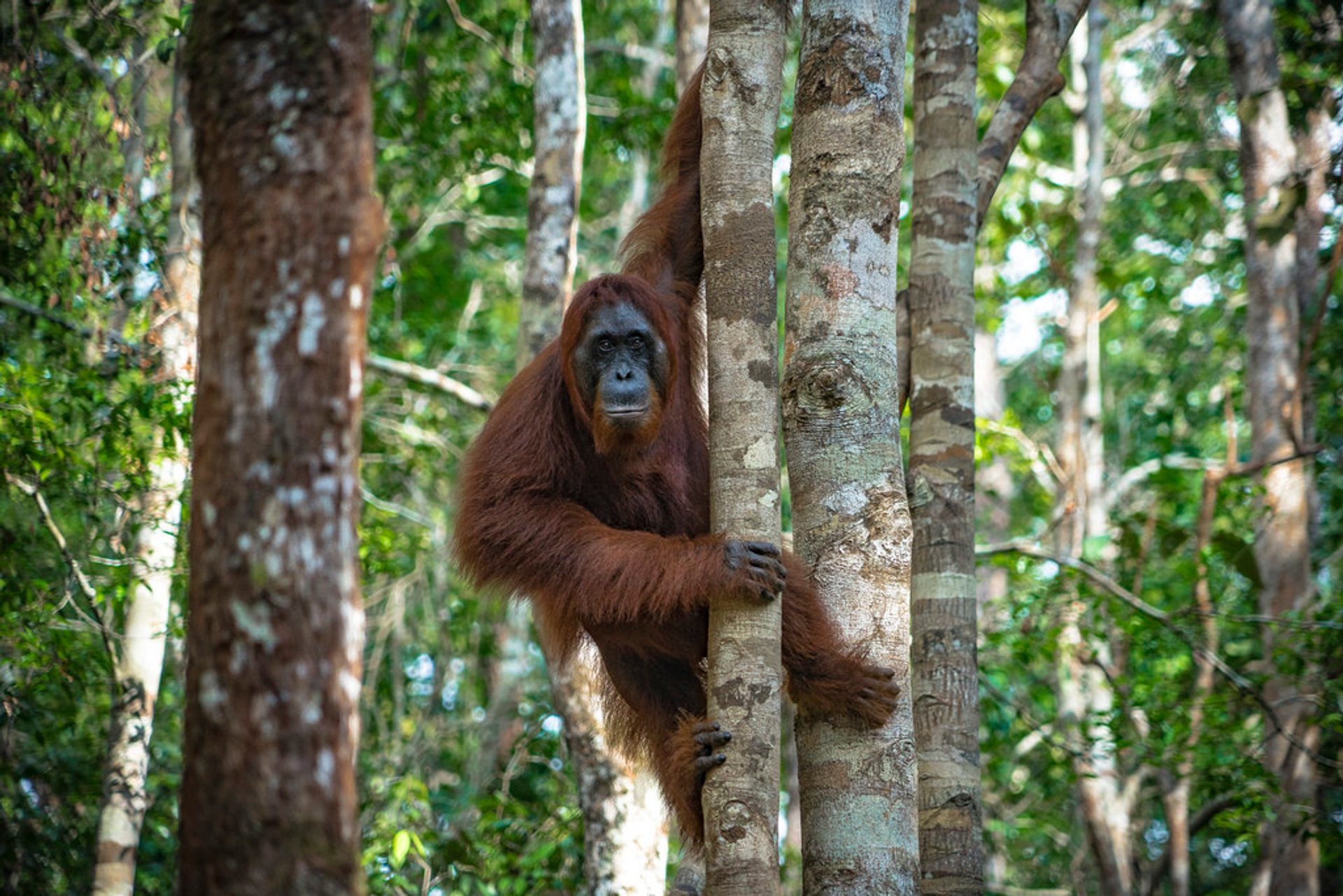 Hiking in the Wild Forests of Kalimantan in Borneo - Best Season 2020