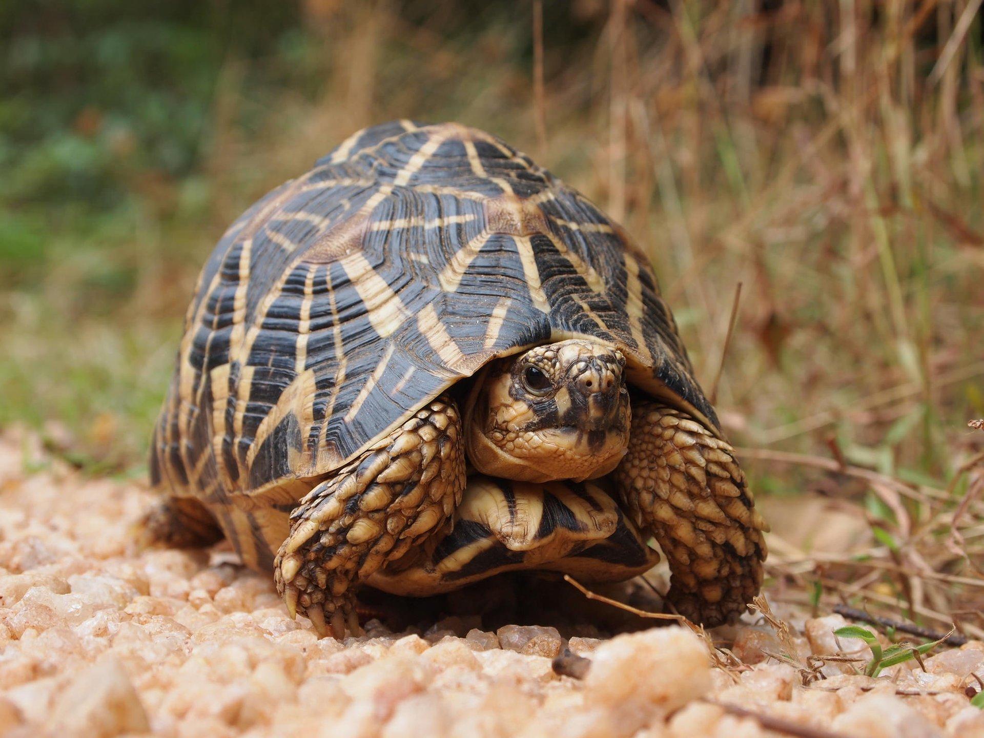 Turtle Watching in Sri Lanka 2019 - Best Time
