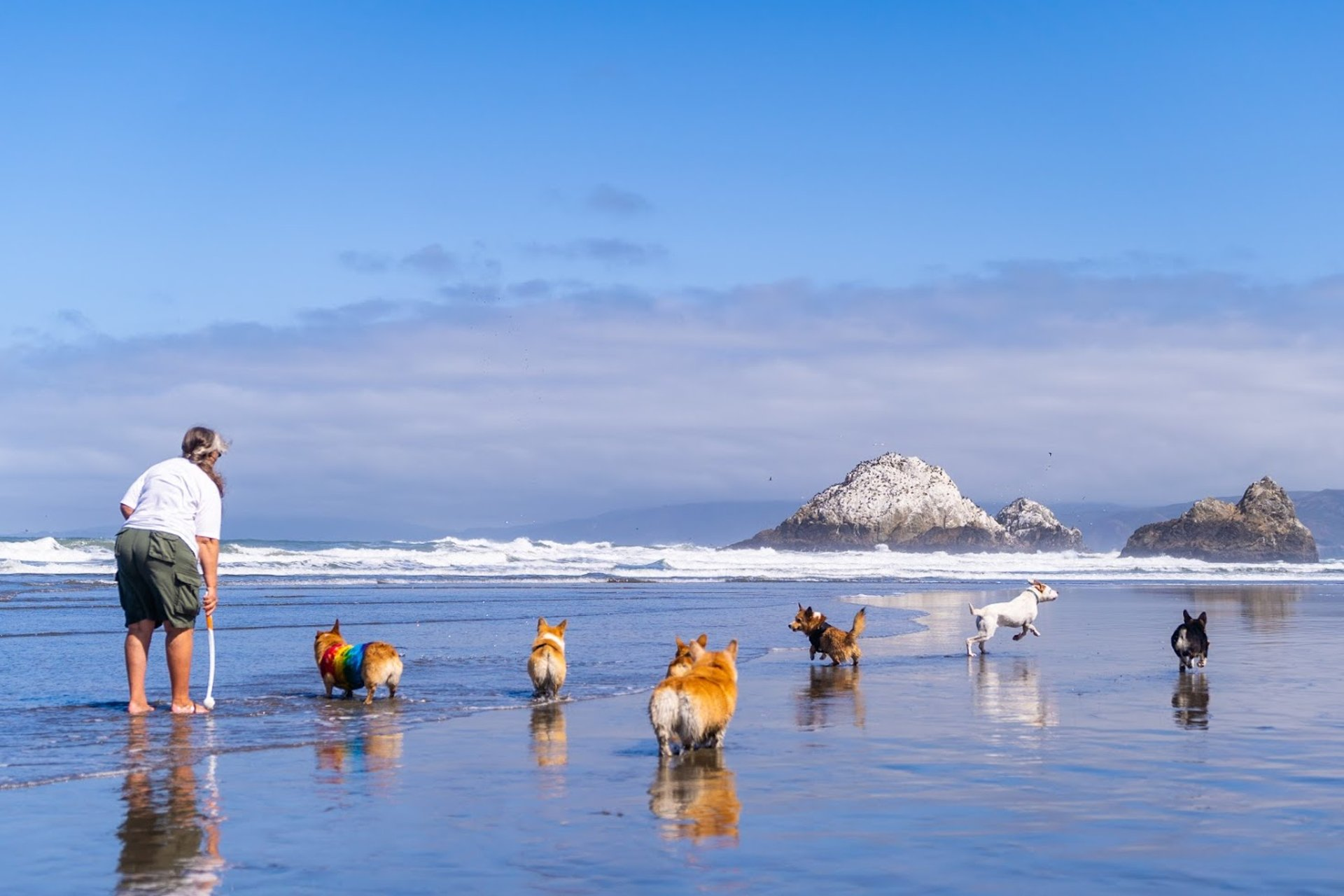 Best time for Corgi Con in San Francisco 2020