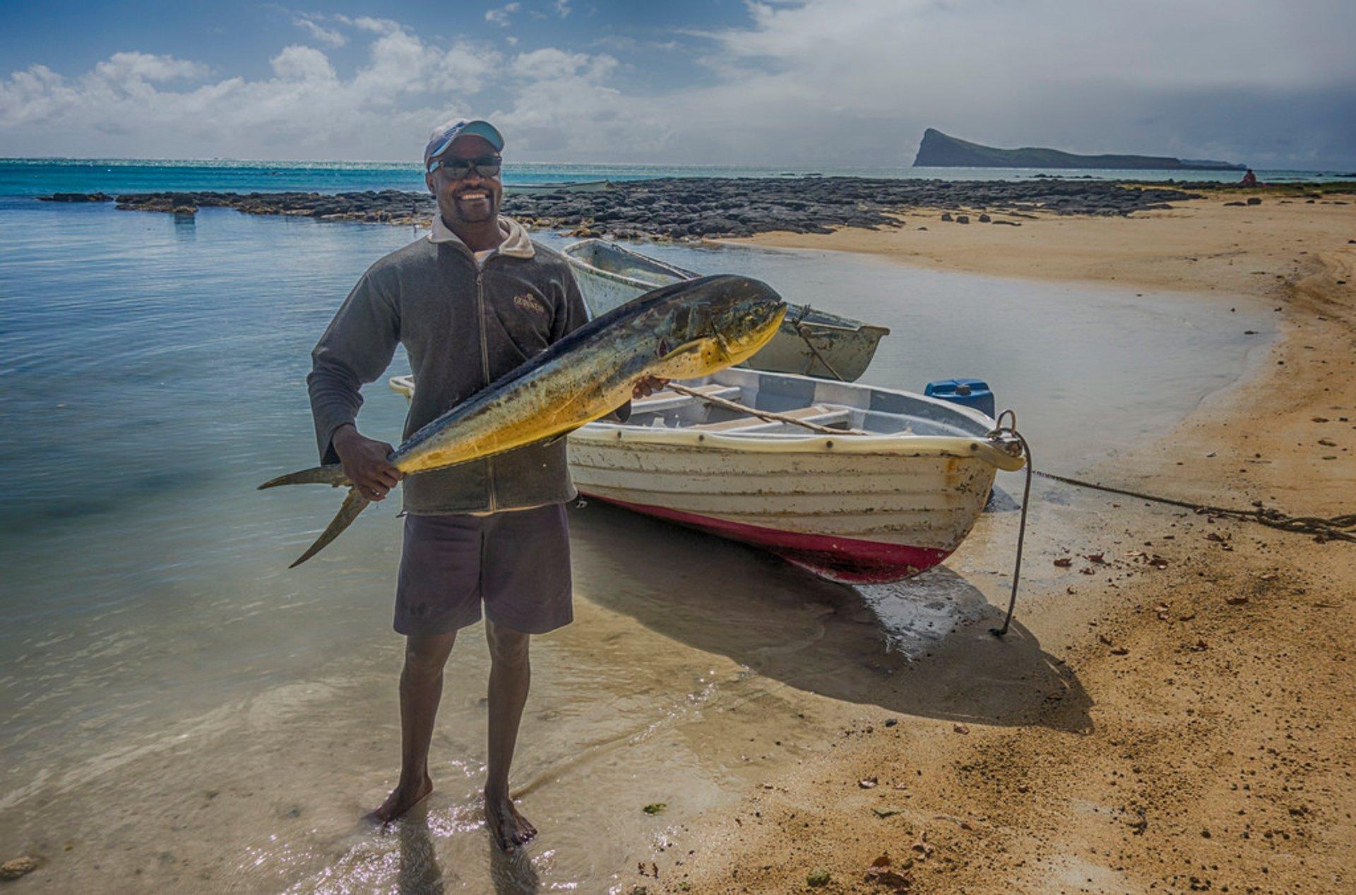 Dorado in Mauritius 2020