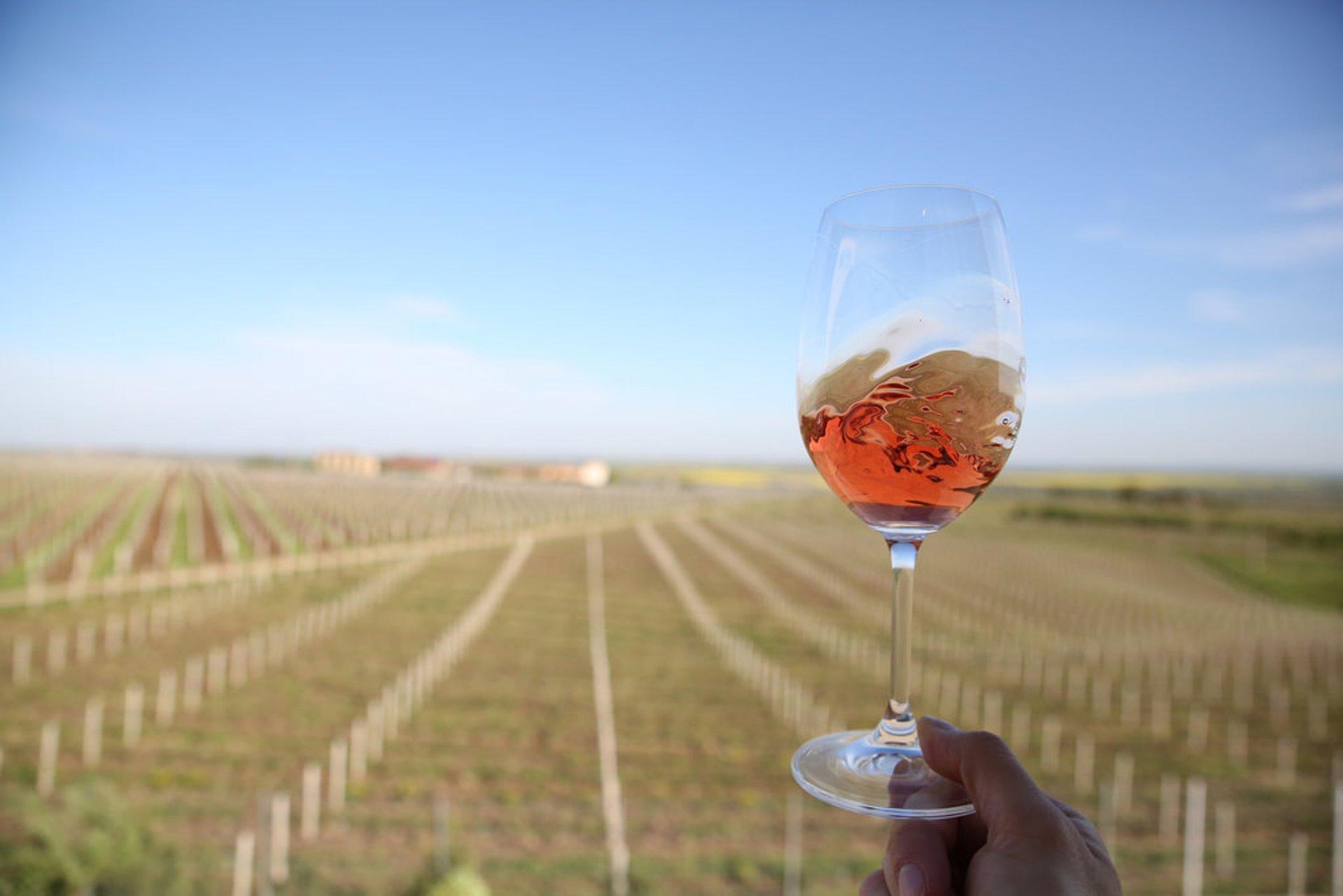 Wine Season in Romania - Best Time