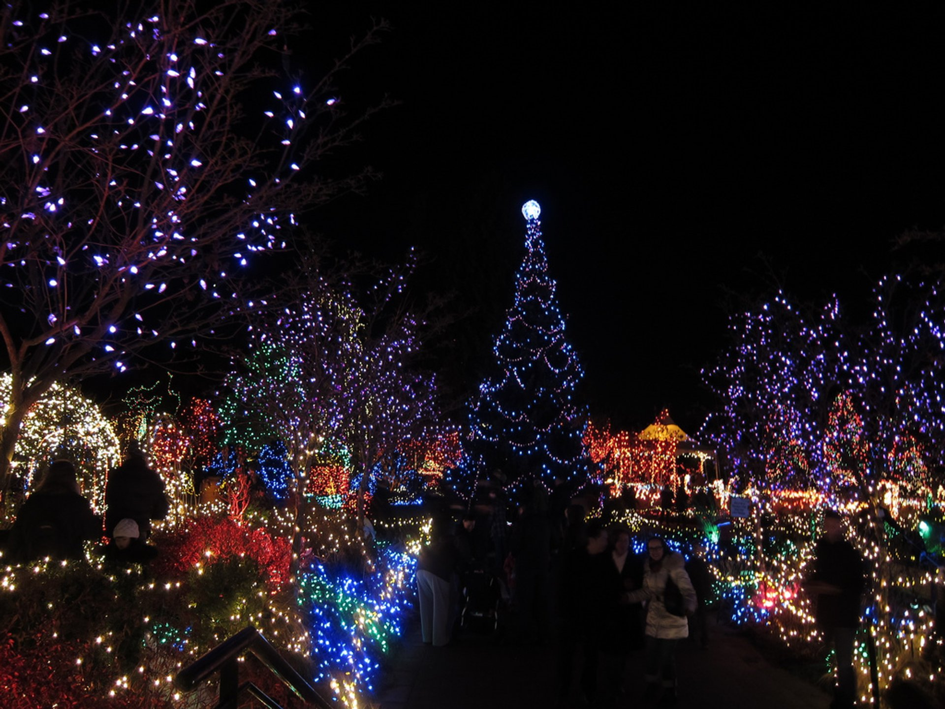 Best time to see VanDusen Festival of Lights 2020