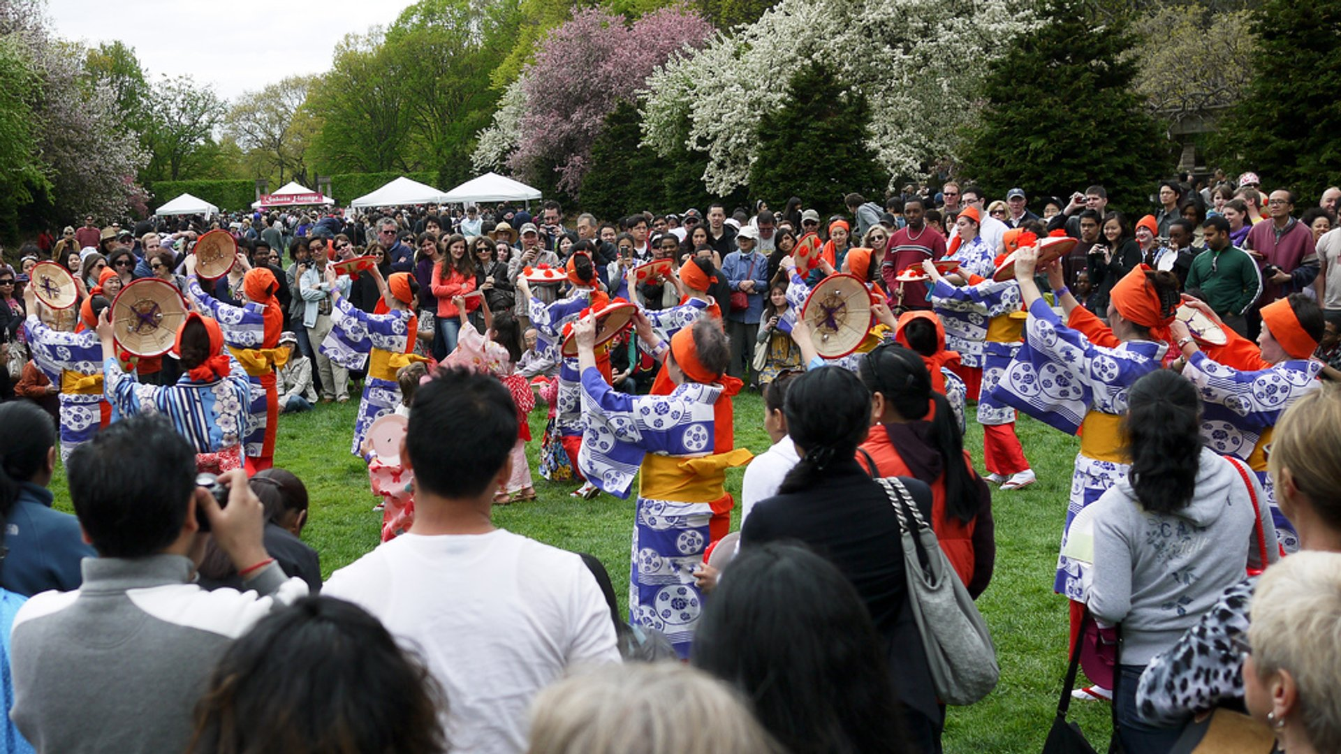 Sakura Matsuri: Cherry Blossom Festival in New York - Best Season 2020