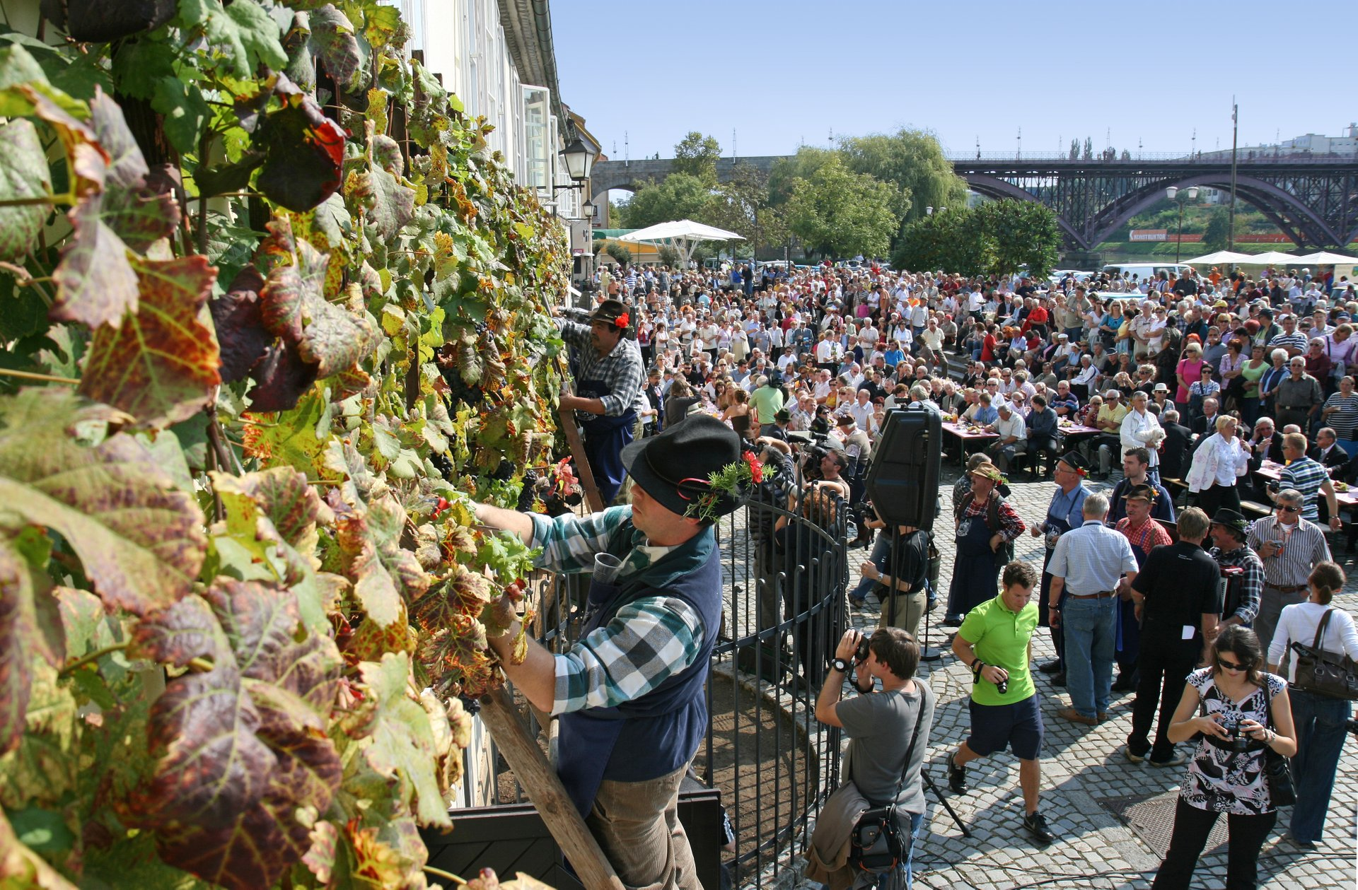 The Old Vine Festival in Maribor 2020