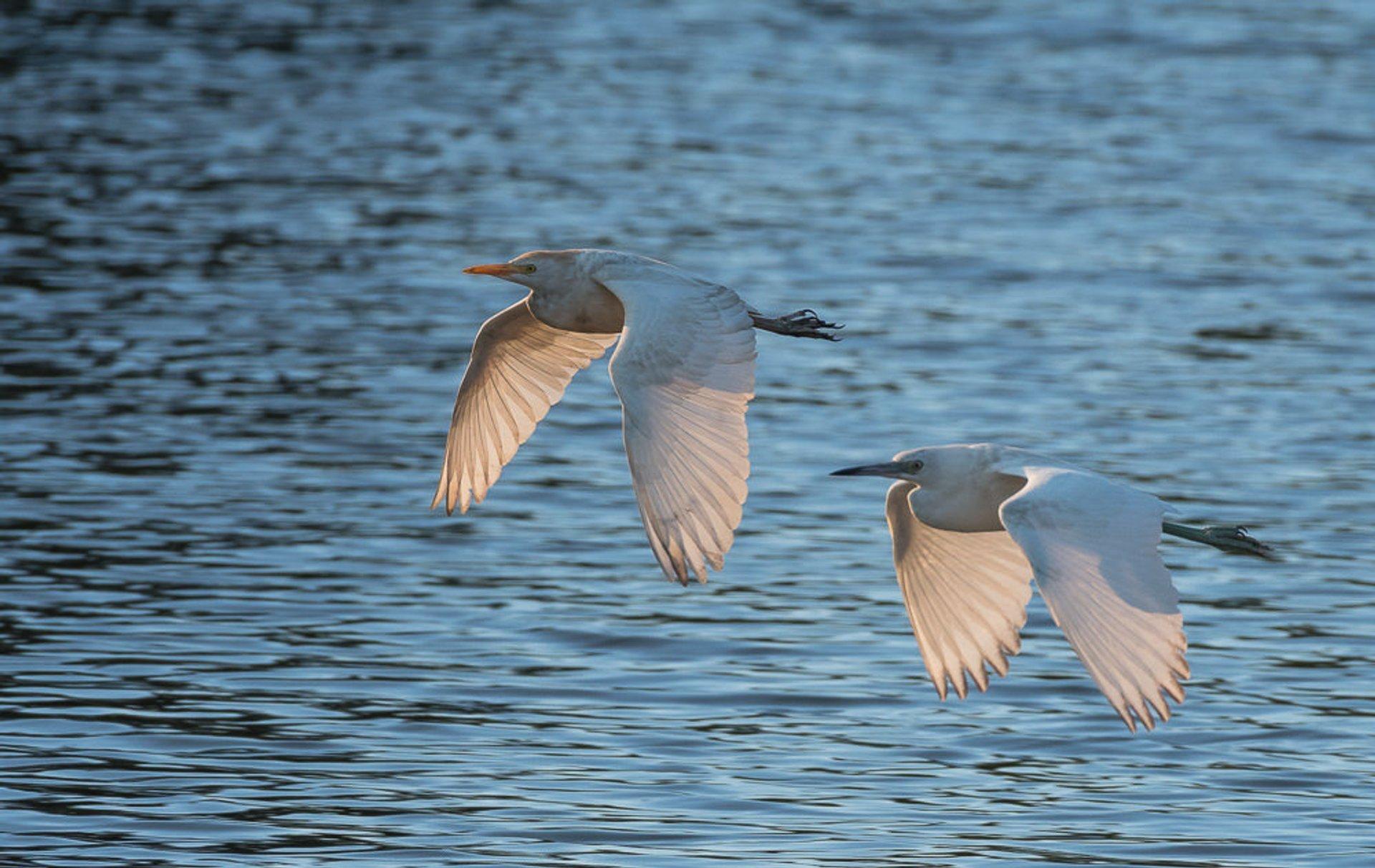 Birdwatching  in Florida - Best Season 2020
