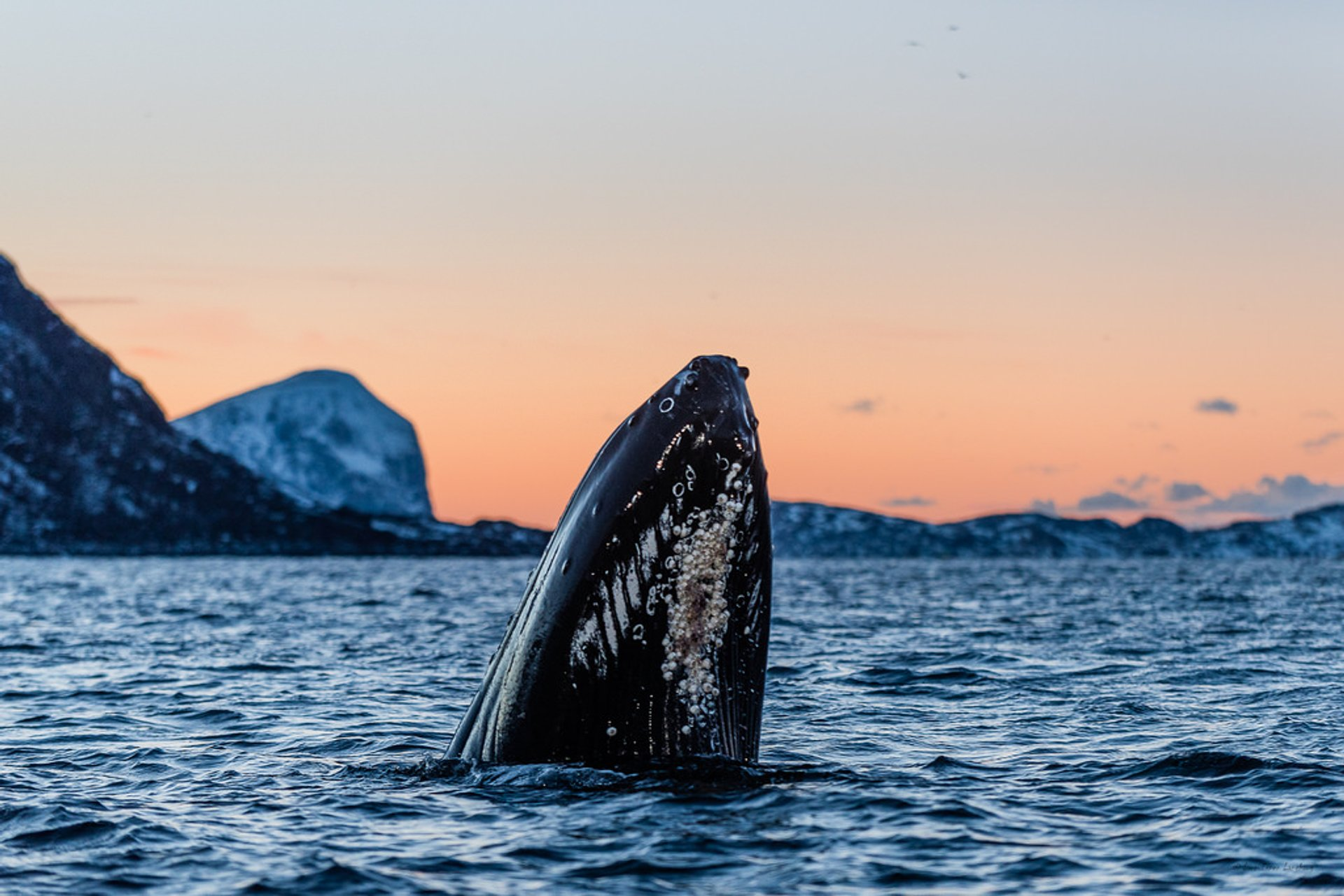 Whale Safari in Norway - Best Season 2019