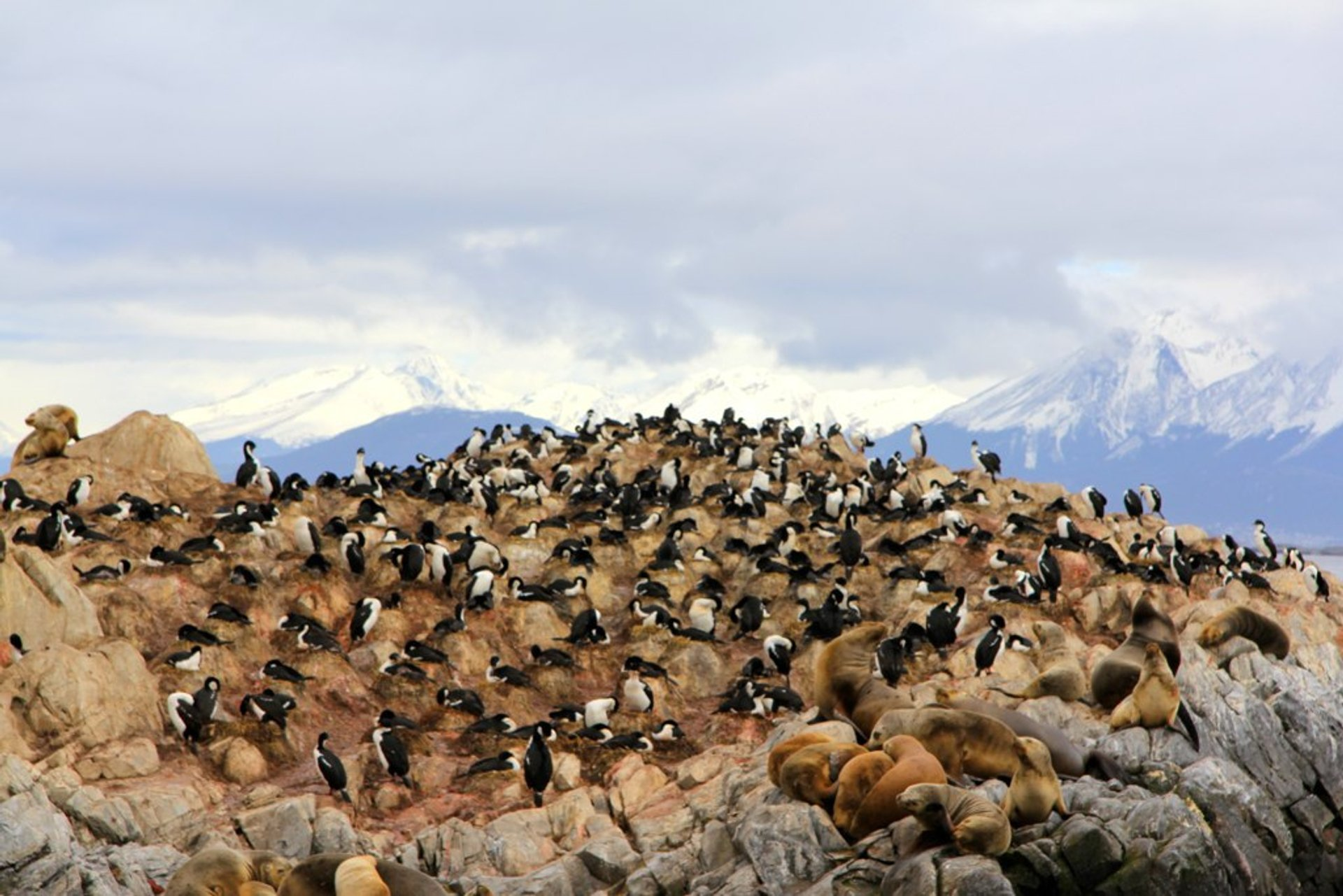Sea lions and penguins, Ushuaia Department, Tierra del Fuego, Patagonia 2020