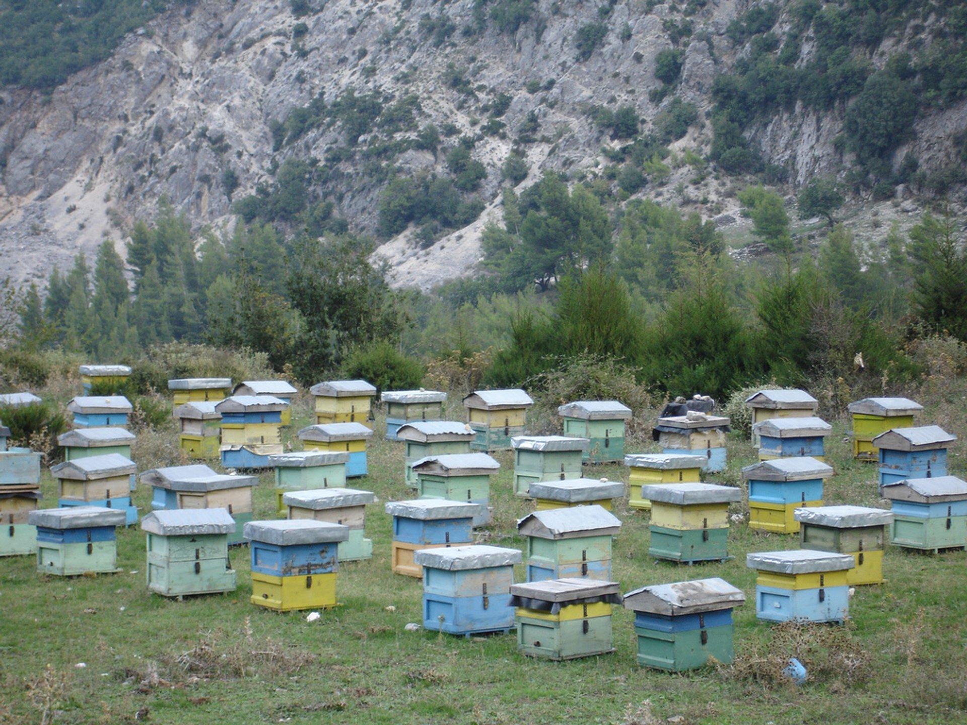 Albanian beehives 2020