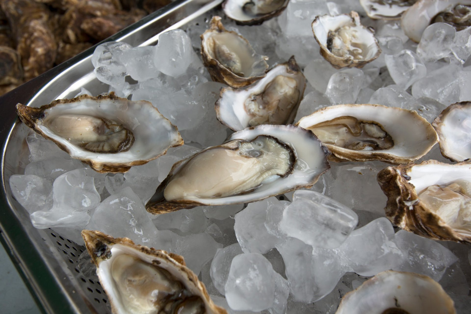 Oysters in Scotland - Best Season 2019