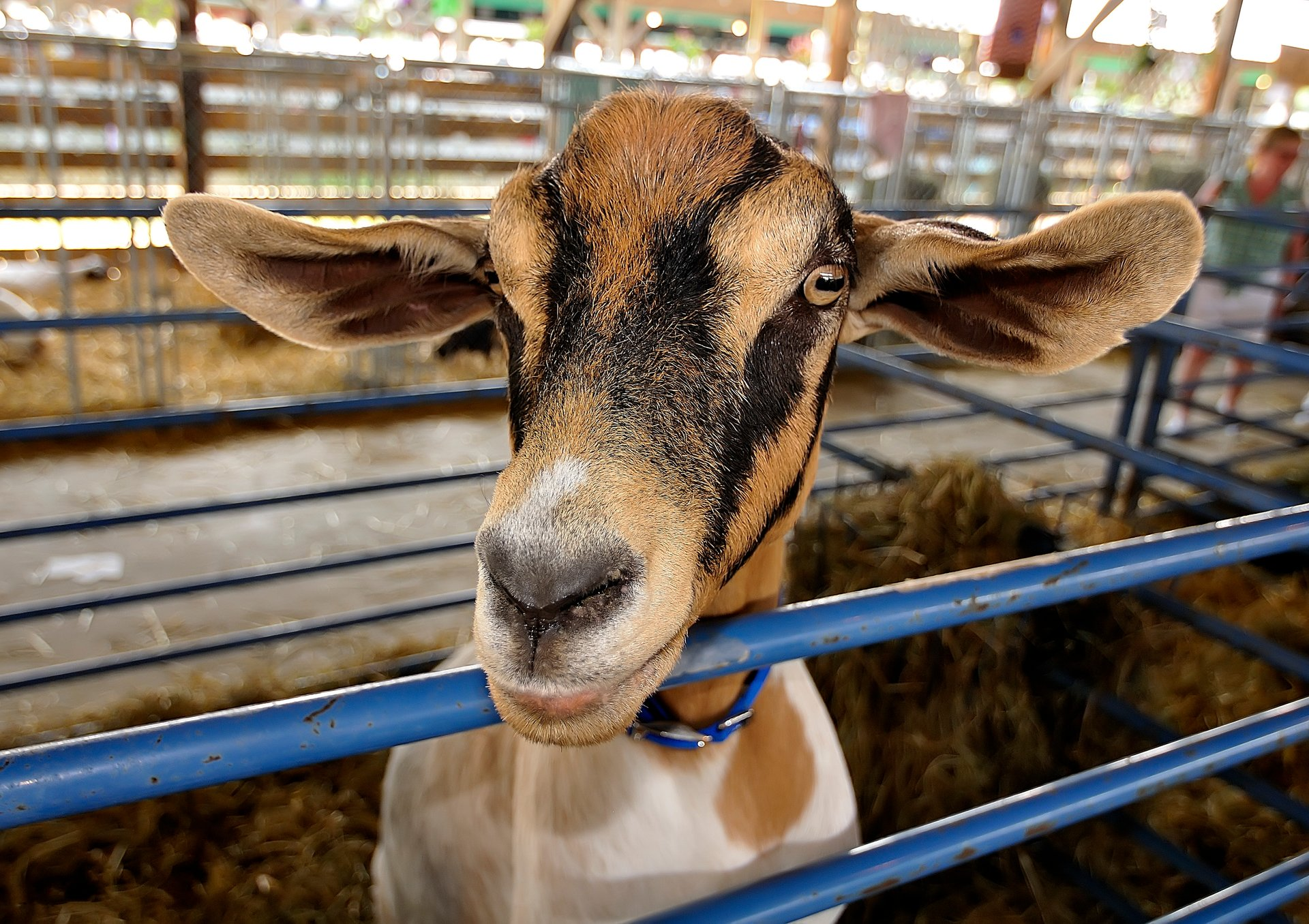 New Jersey State Fair in New Jersey - Best Season 2020