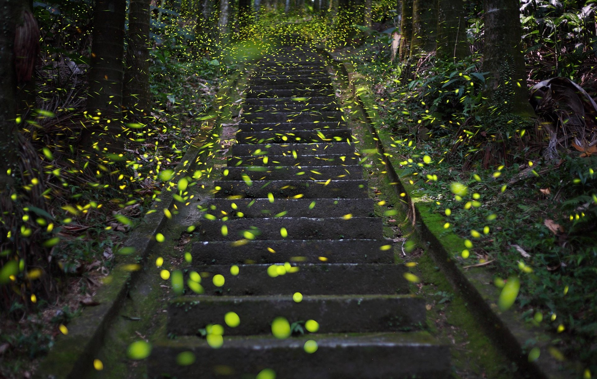 Taipei fireflies 2020