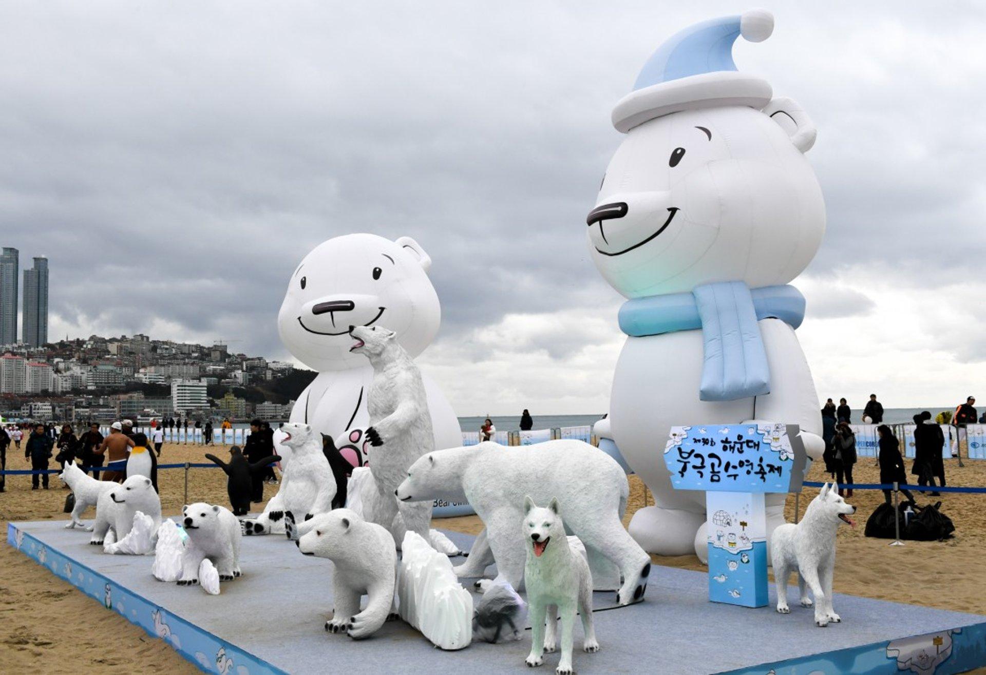 Polar Bear Swim Festival in South Korea - Best Time