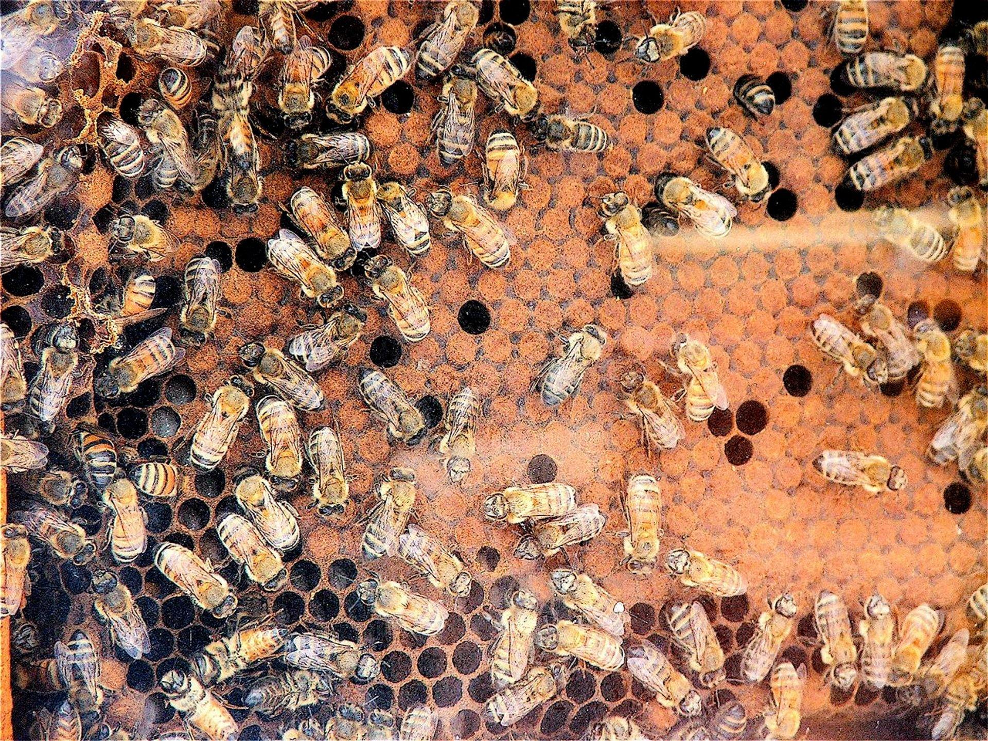 Honey Season in Malta 2020 - Best Time