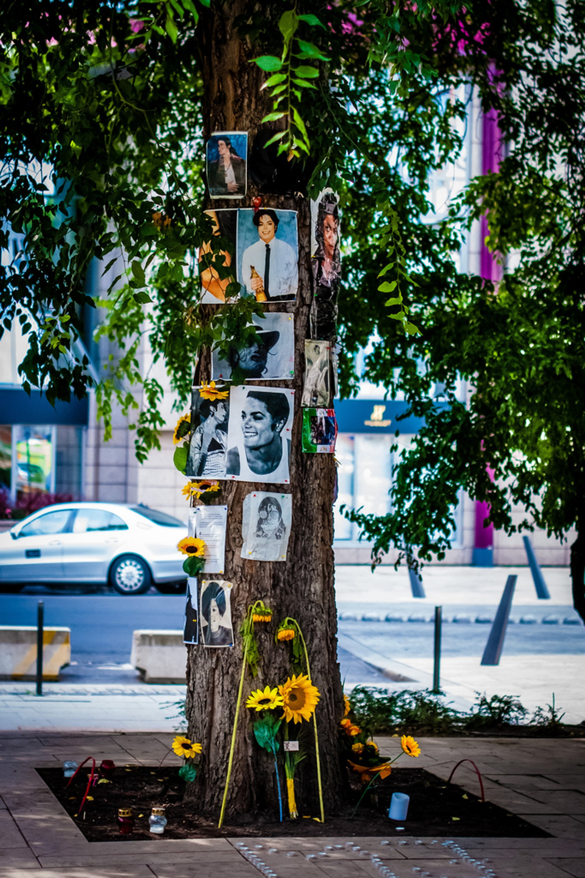 Michael Jackson Memorial Tree in Hungary - Best Season 2020