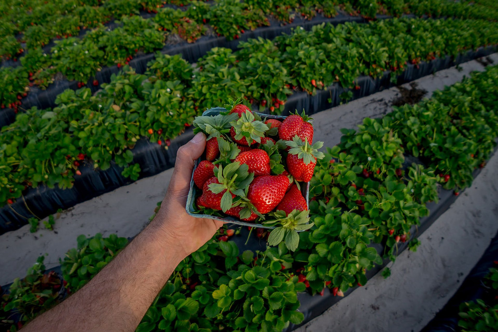 Florida Strawberry Festival in Florida 2020 - Best Time