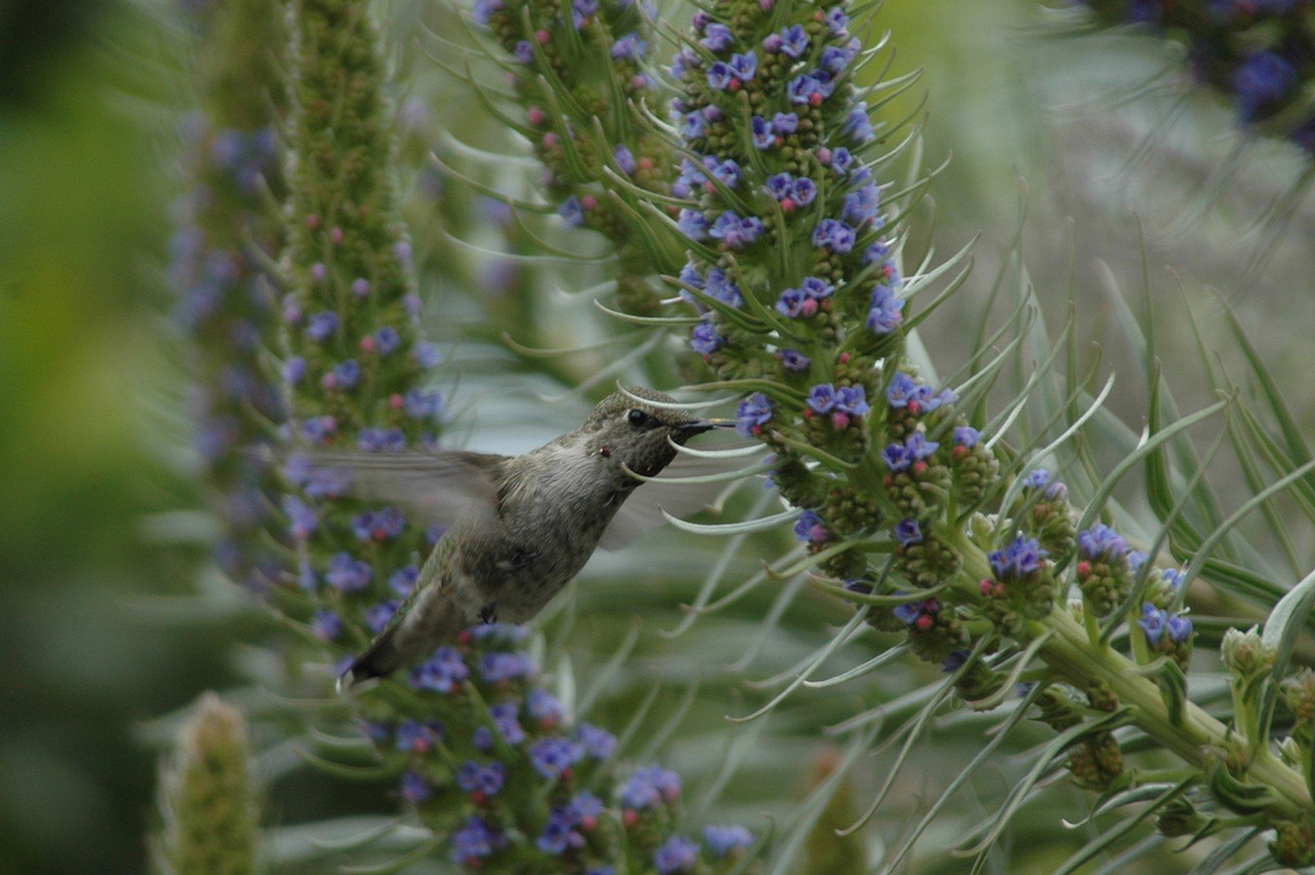 Birdwatching in Madeira - Best Season 2020
