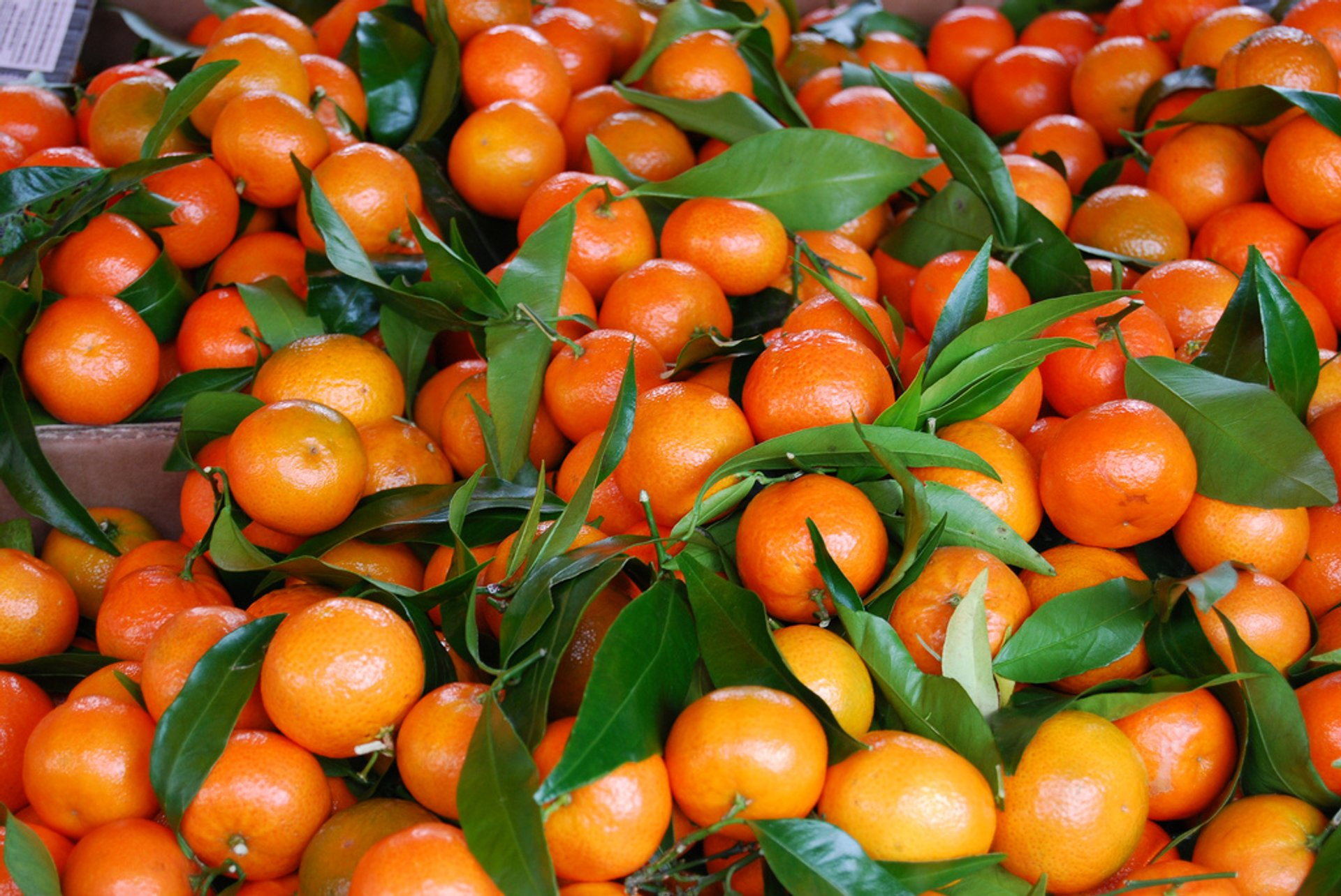 Corsican Clementines in Corsica 2020 - Best Time