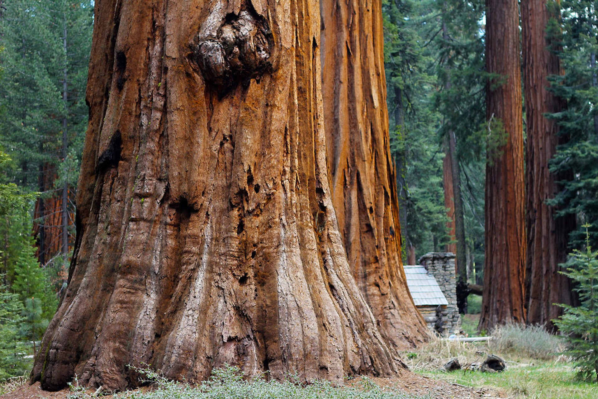 Giant Sequoias of Yosemite National Park in Yosemite - Best Season 2020