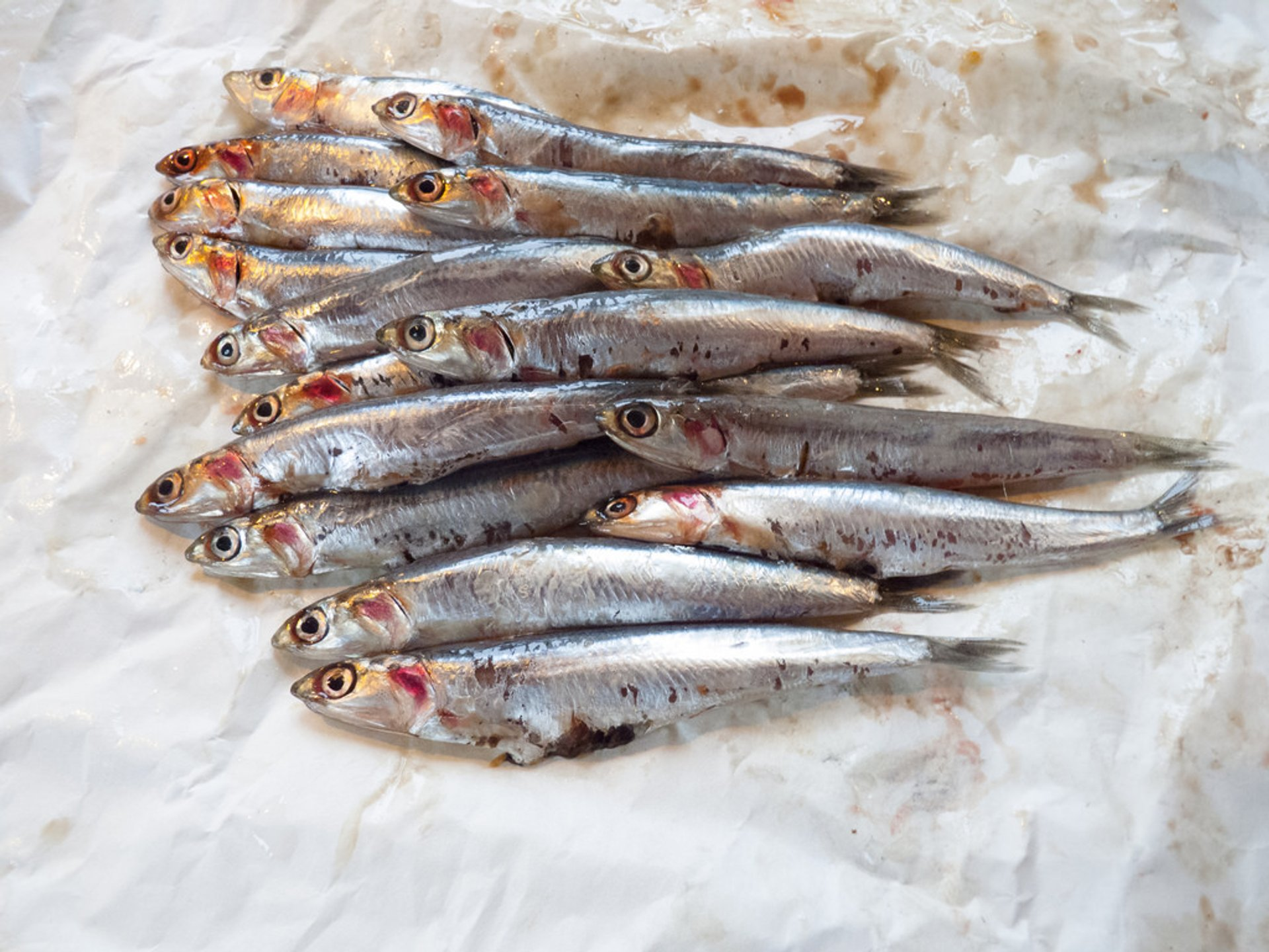 Anchovies in Corsica 2020 - Best Time