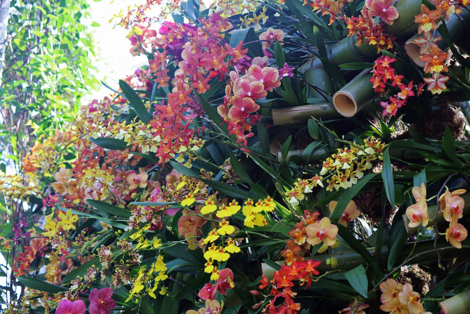 Best time to see NYBG Orchid Show 2020