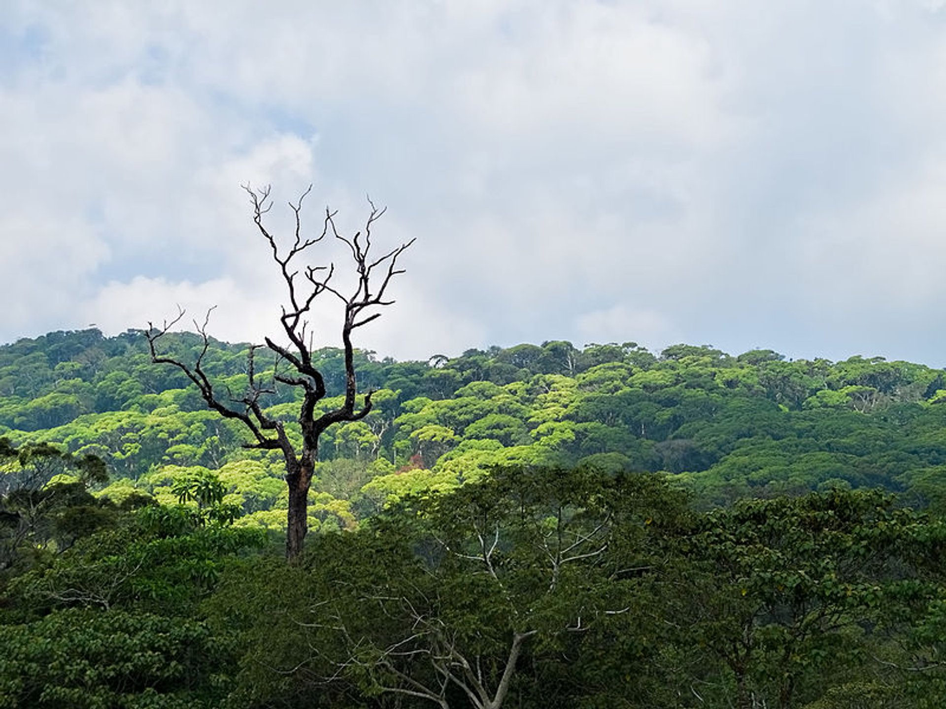 Sinharaja Rainforest in Sri Lanka 2020 - Best Time