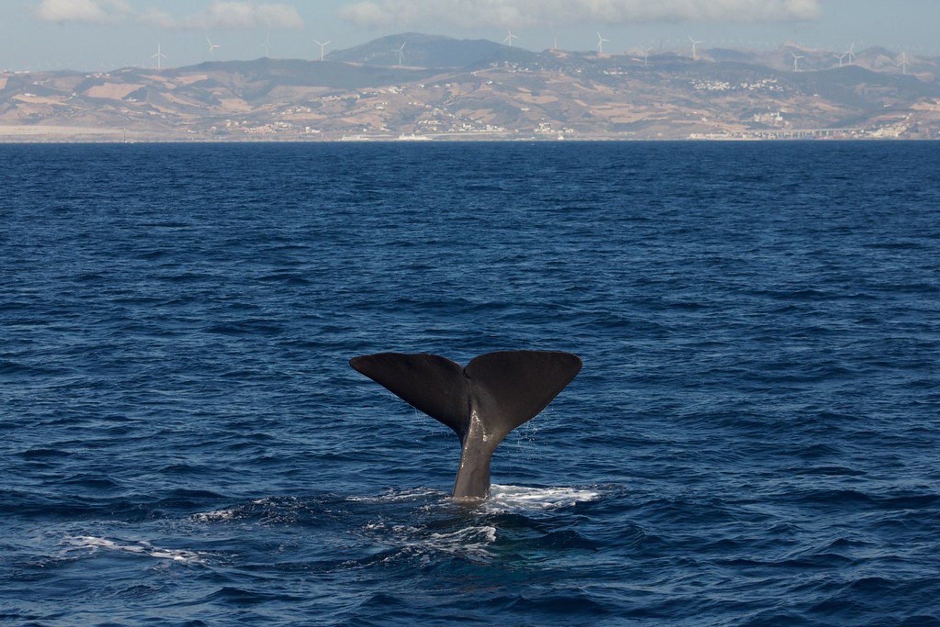 Sperm Whale 2020