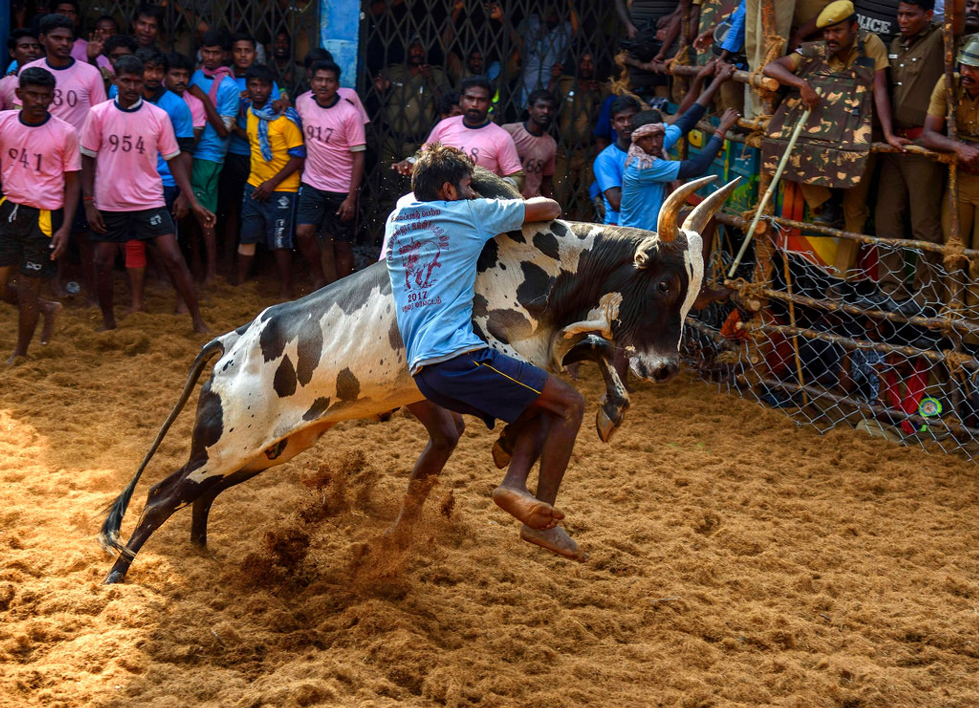 Best time for Jallikattu in India 2020