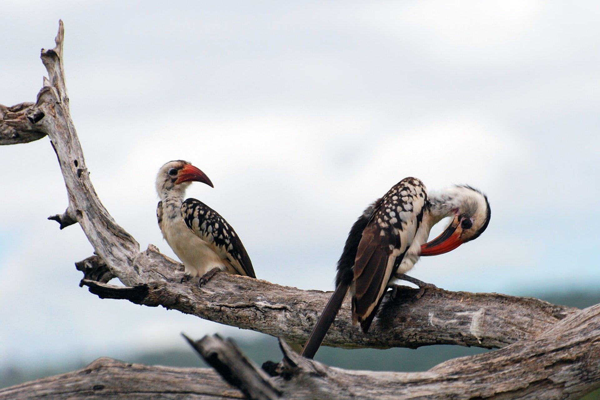 Birdwatching in Tanzania 2019 - Best Time