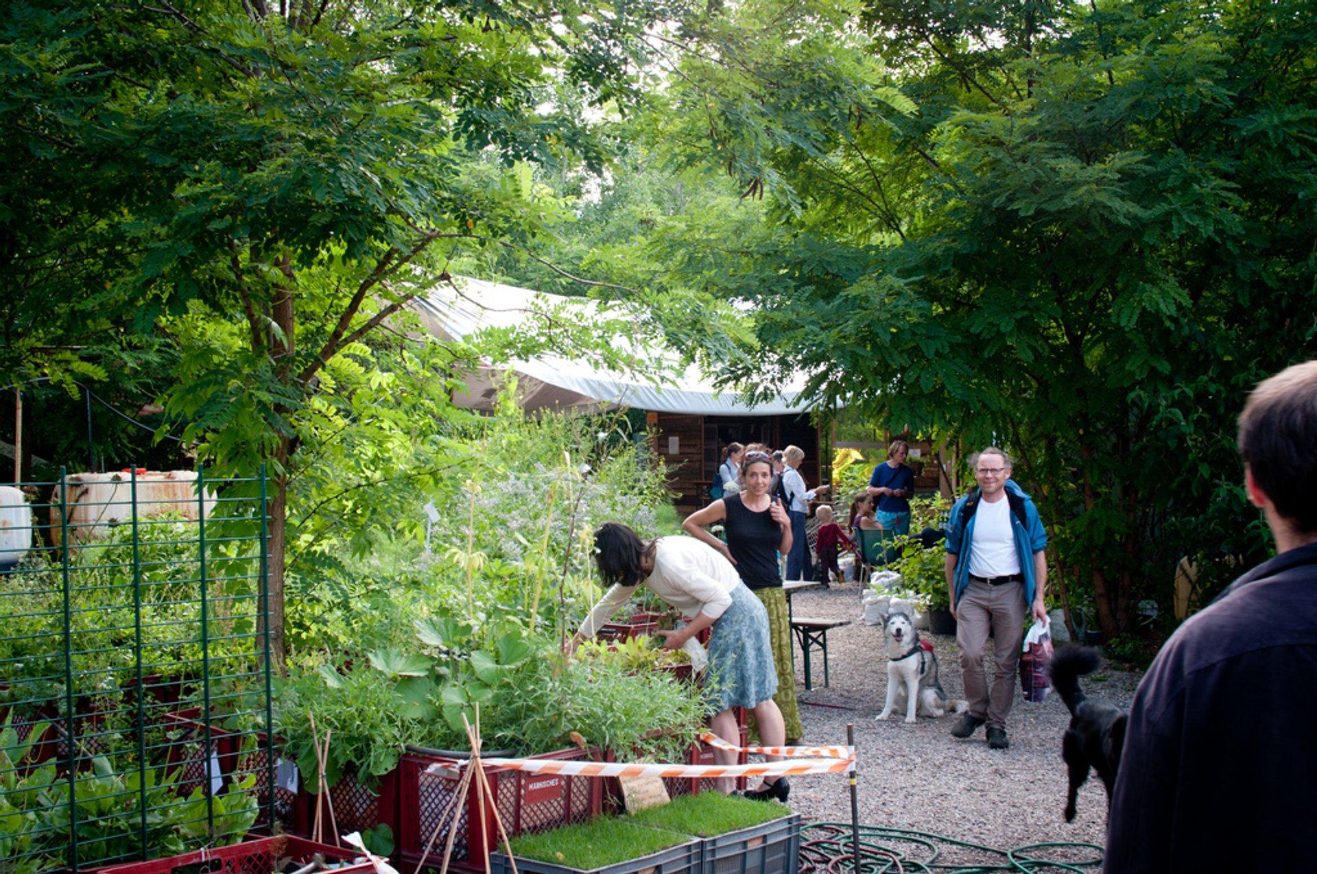 Urban Gardening at Prinzessinnengärten in Berlin - Best Season 2020