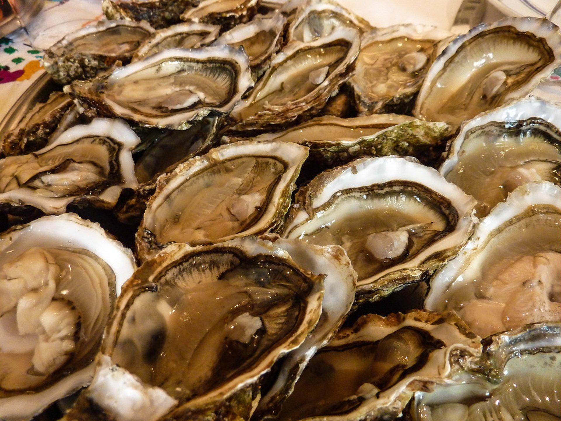 Oyster Safari in the Wadden Sea in Denmark - Best Season 2019