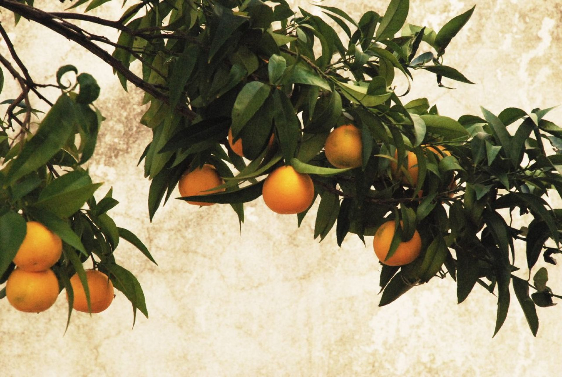 Best time for Orange Harvest in Portugal