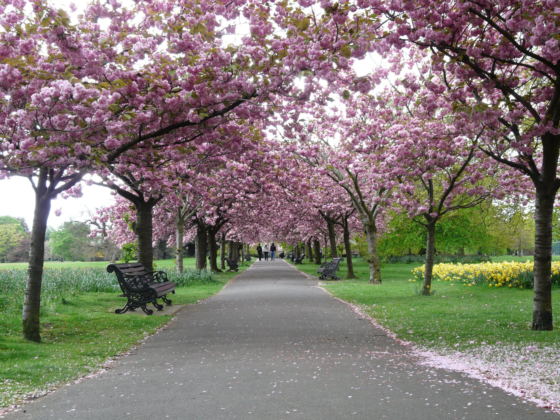 Spring in Greenwich Park 2020