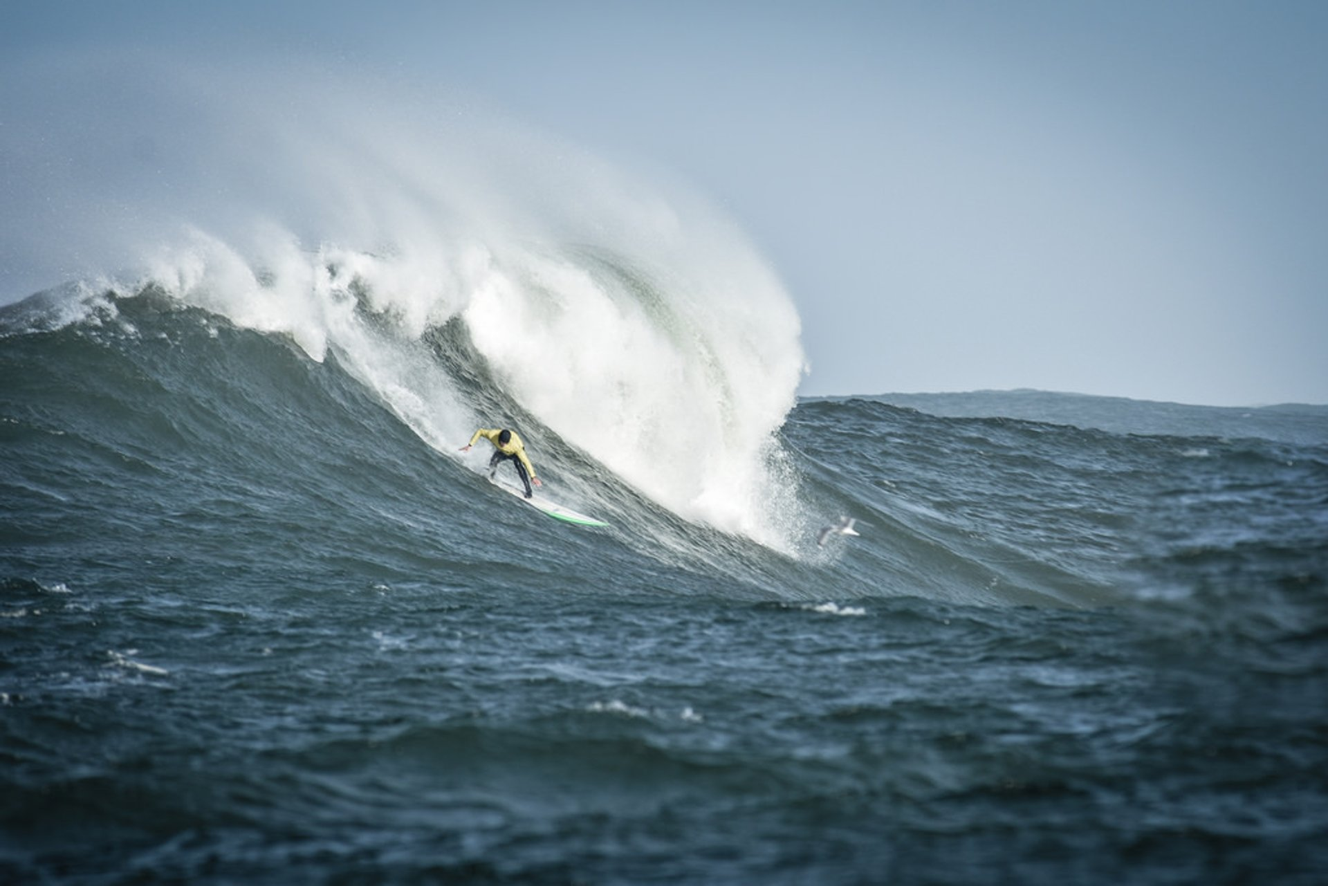 Mavericks, Half Moon Bay 2019