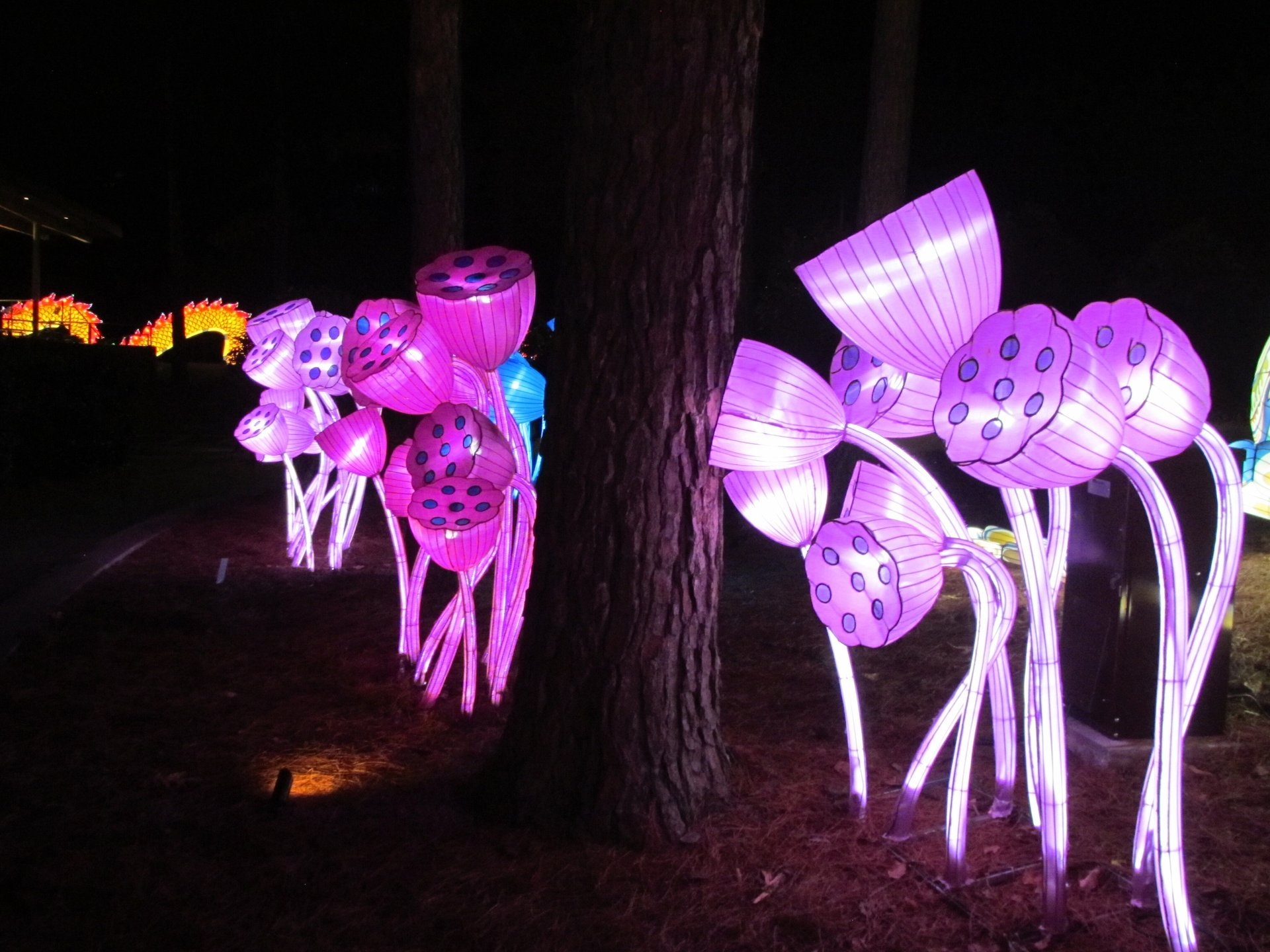 Best time to see NC Chinese Lantern Festival 2020