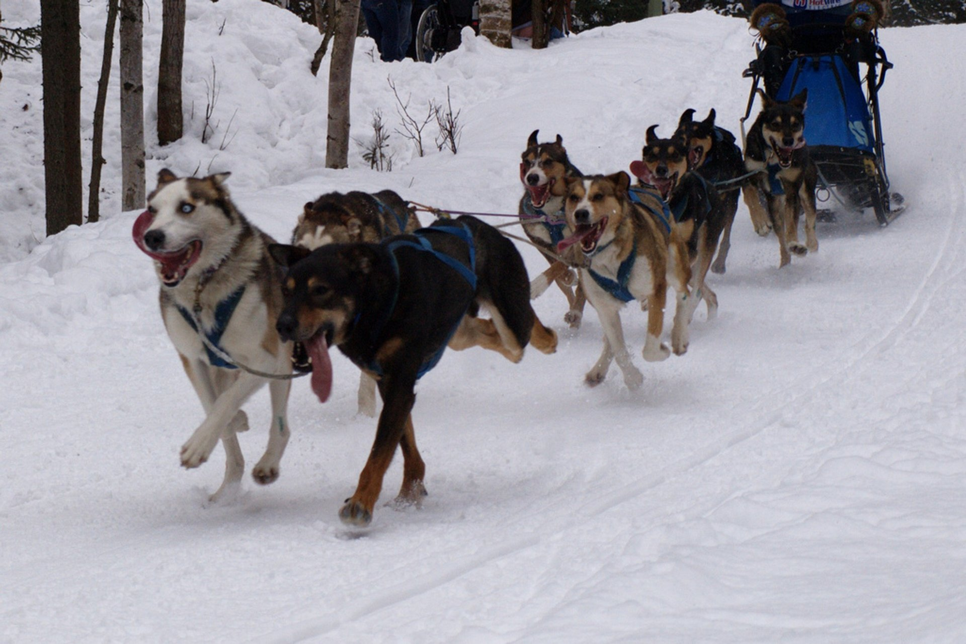 Sled dog race 2020