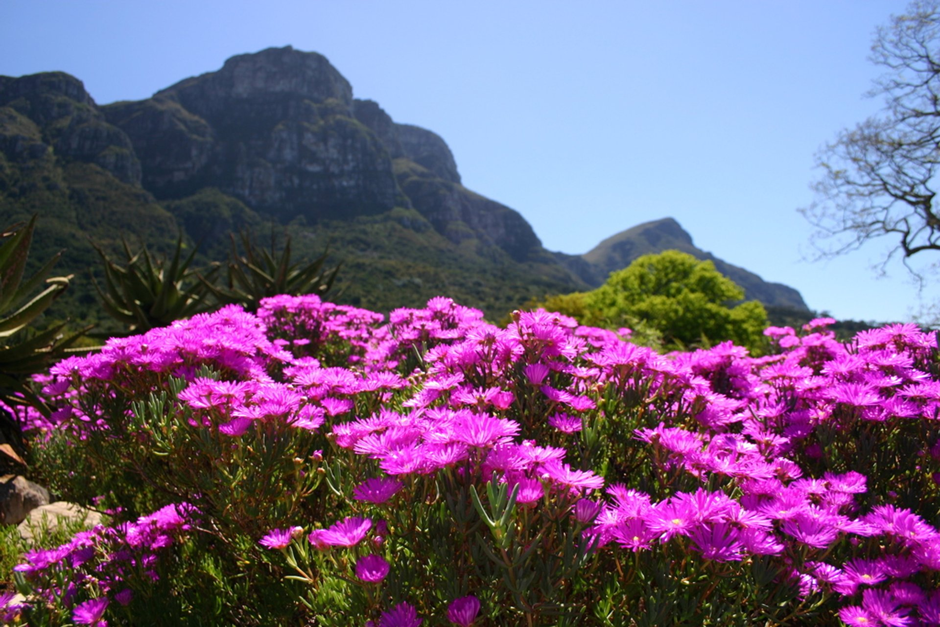 Spring in Cape Town 2020 - Best Time