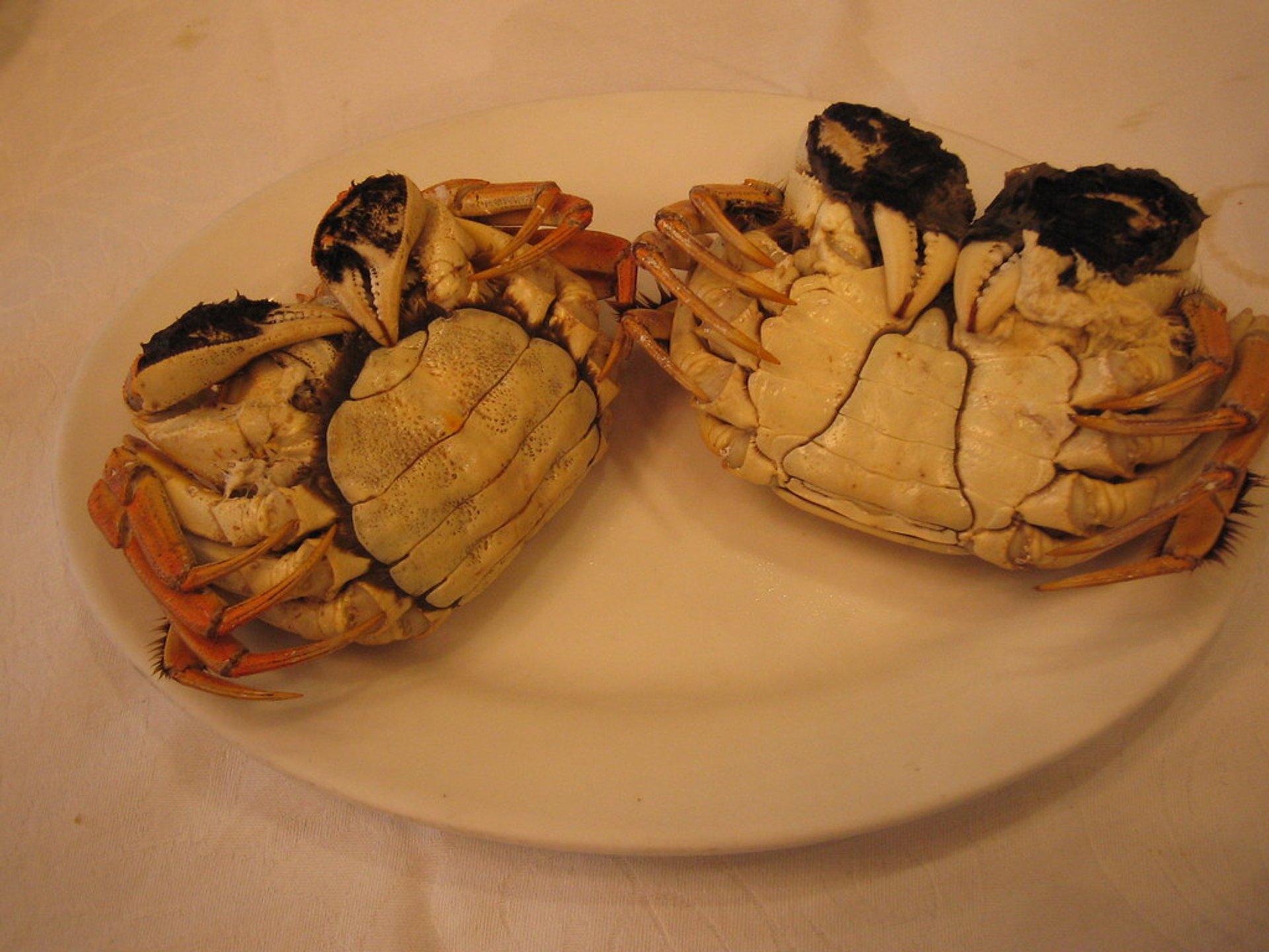 Hairy Crab Season in Shanghai - Best Season 2020